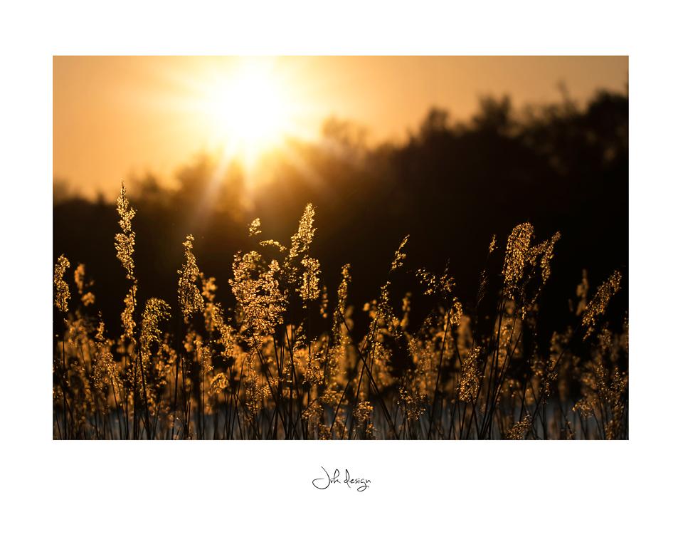 Solnedgangen