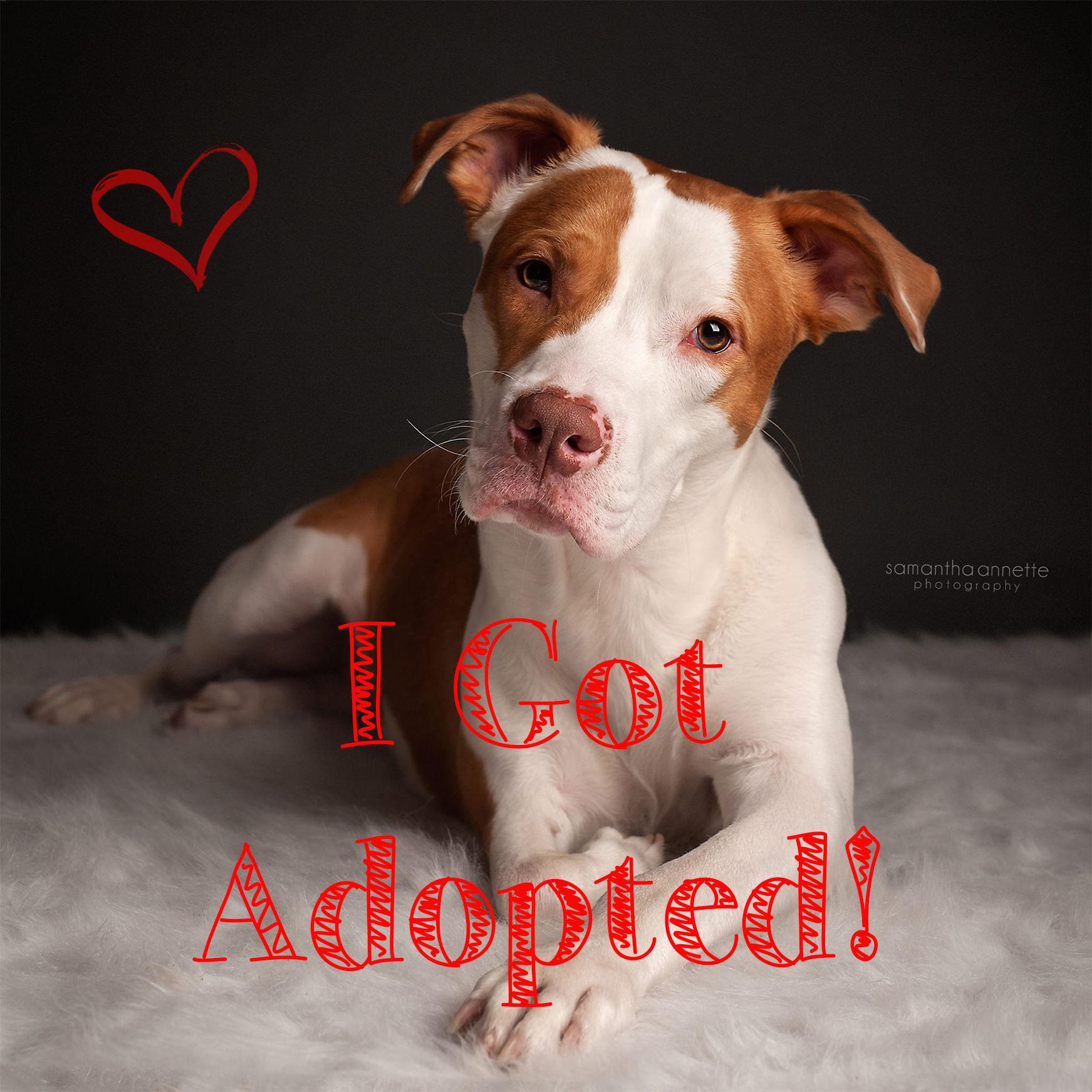 nemo adopted.jpg