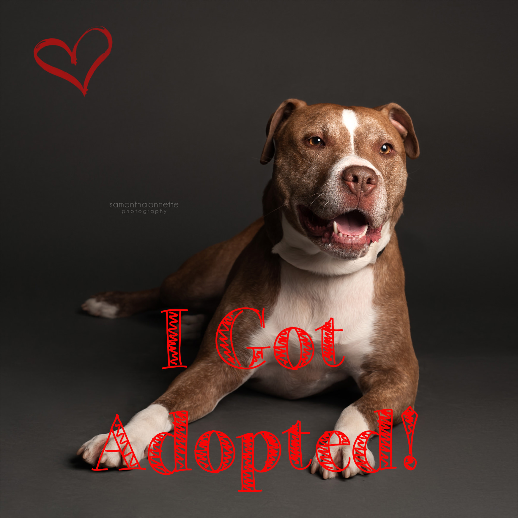 Tacoma got adopted.jpg