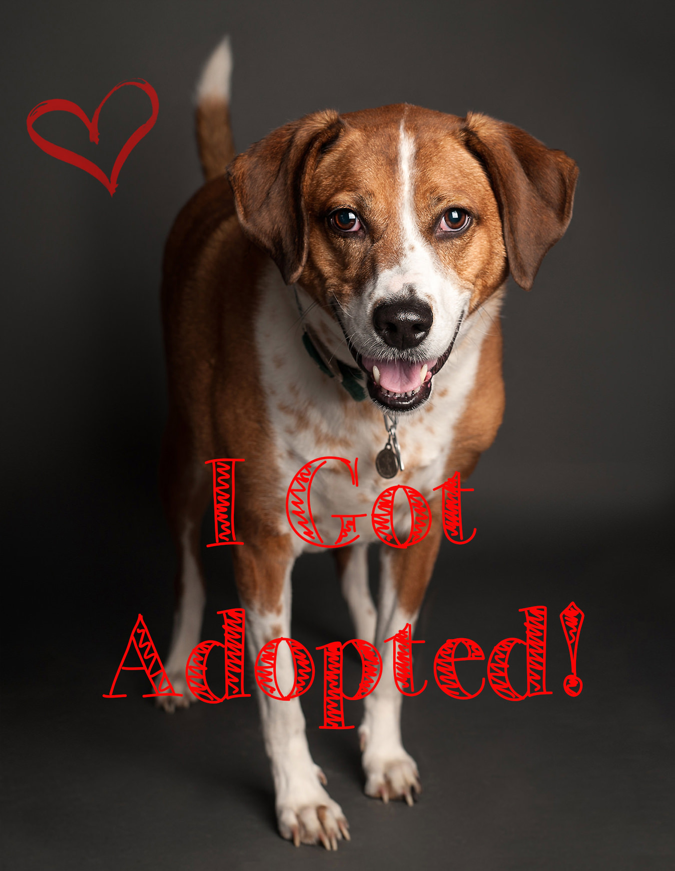so got adopted.jpg