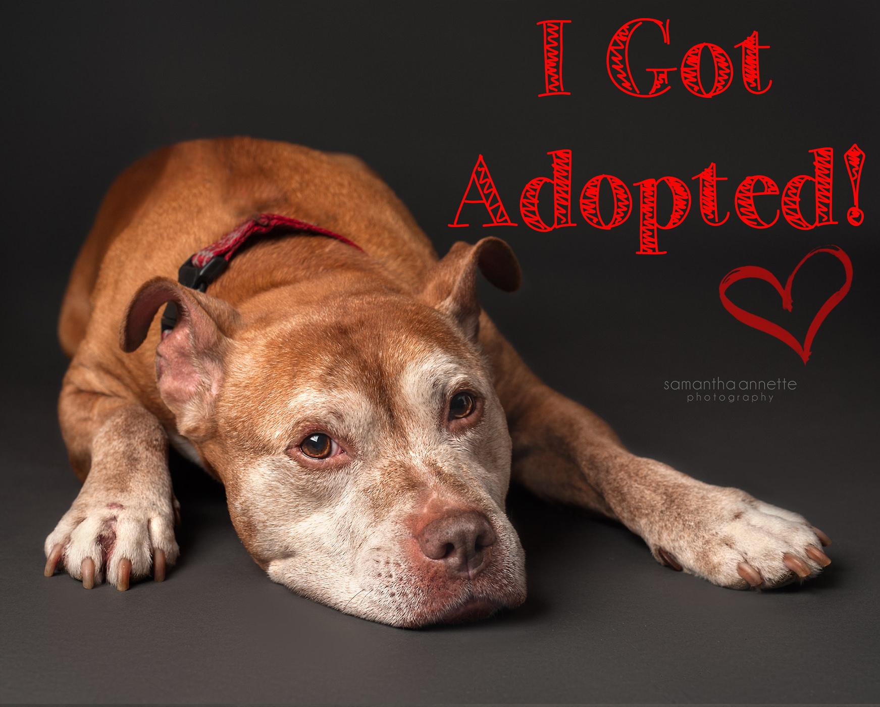 deisel got adopted.jpg
