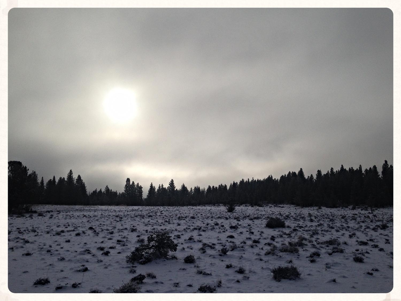 pup_run_winter