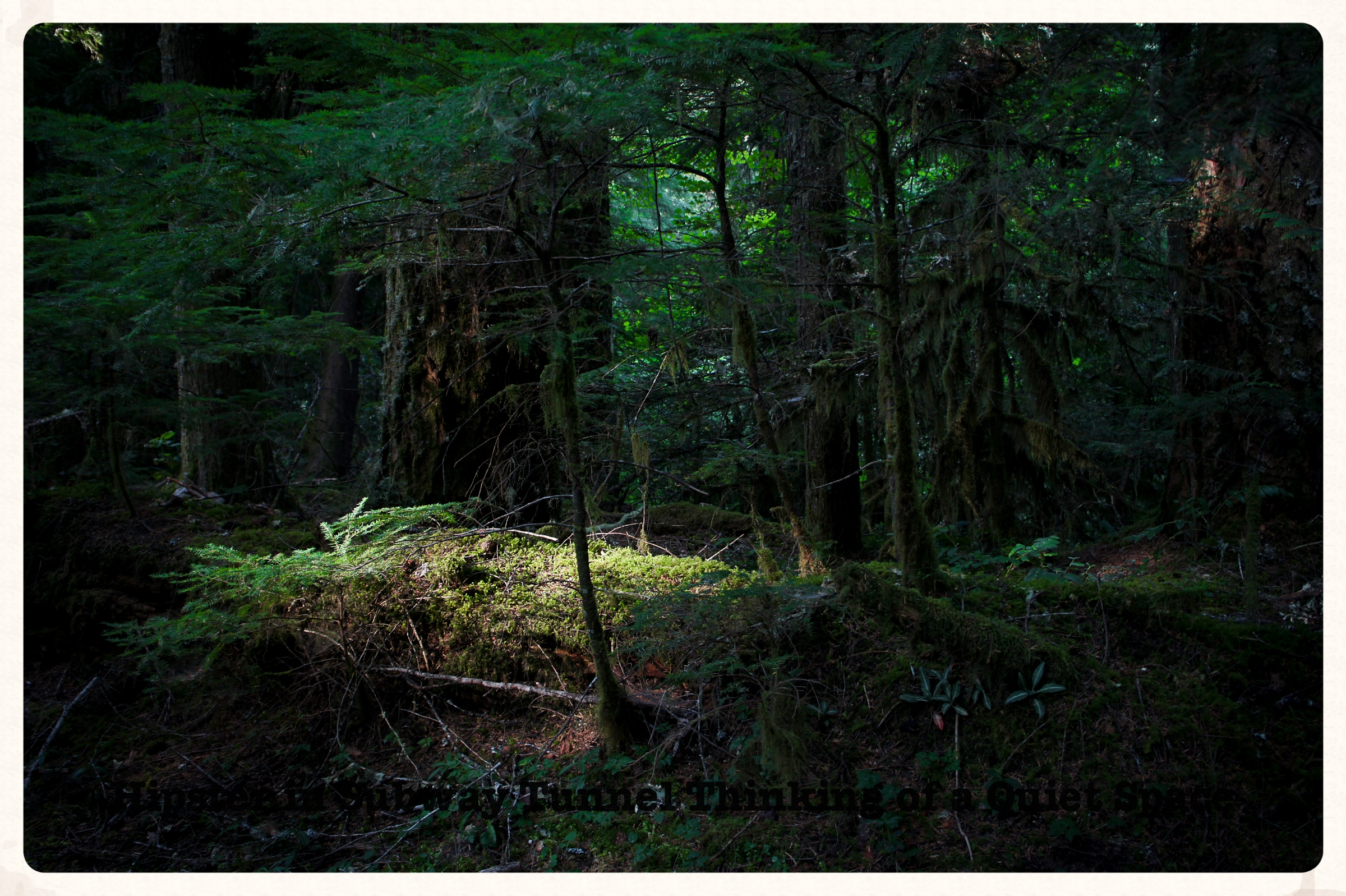 Photograph from my time exploring the forest...