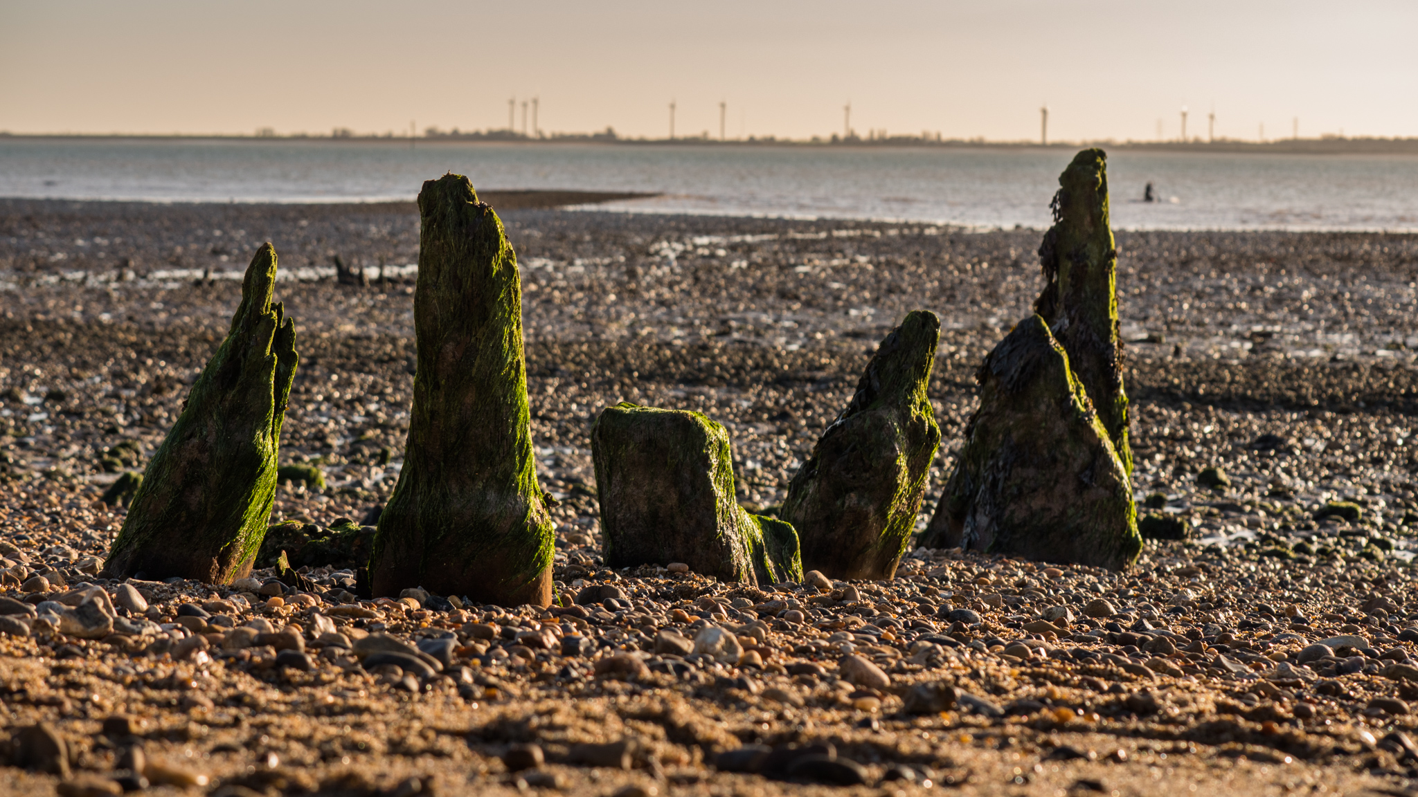 The remains of an old breakwater on the beach