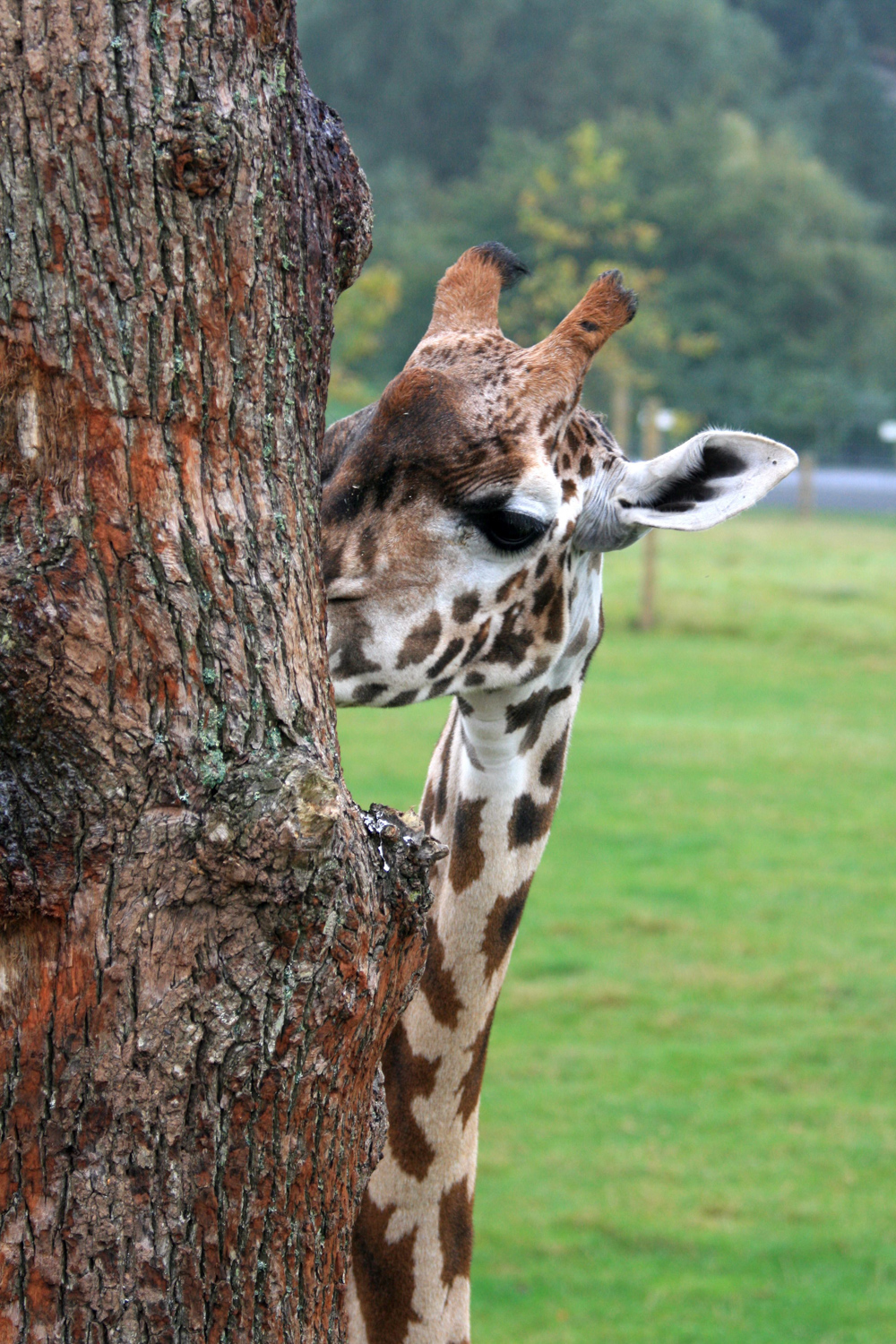The first photo I ever posted to my Photoblog, taken at Marwell Zoo. Not great art, but you've got to start somewhere!