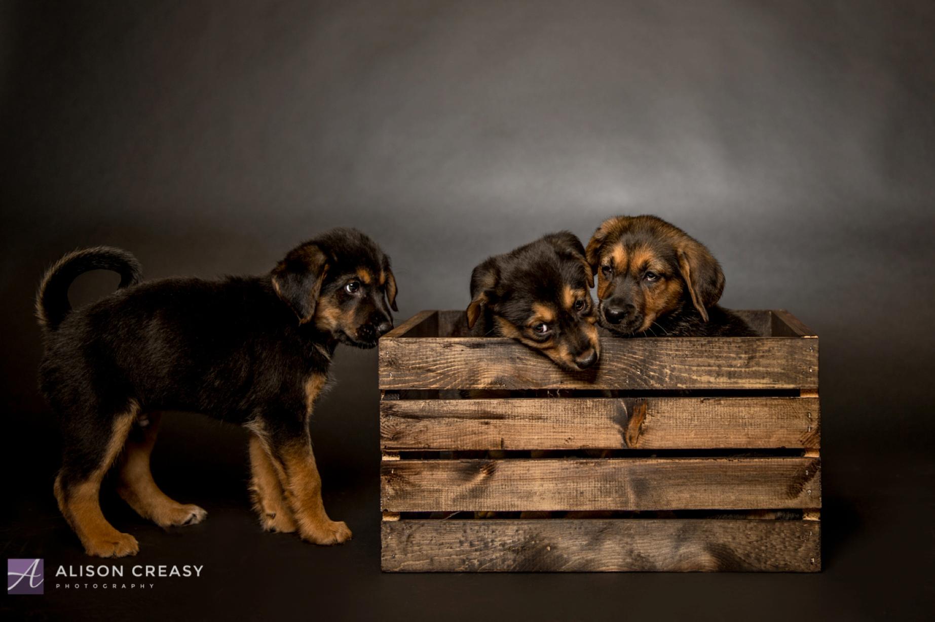 Alison-Creasy-Photography-Lynchburg-VA-Photographer_1041.jpg