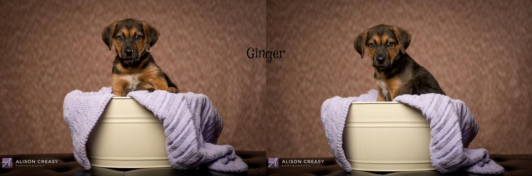 Alison-Creasy-Photography-Lynchburg-VA-Photographer_1035.jpg