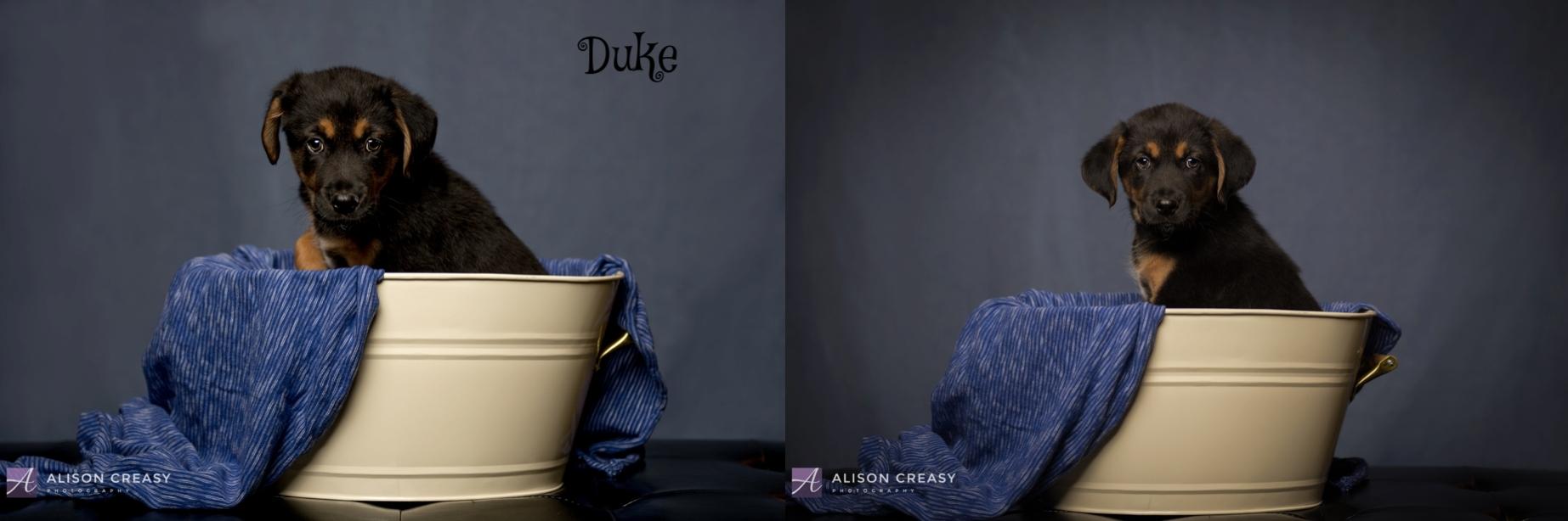 Alison-Creasy-Photography-Lynchburg-VA-Photographer_1034.jpg