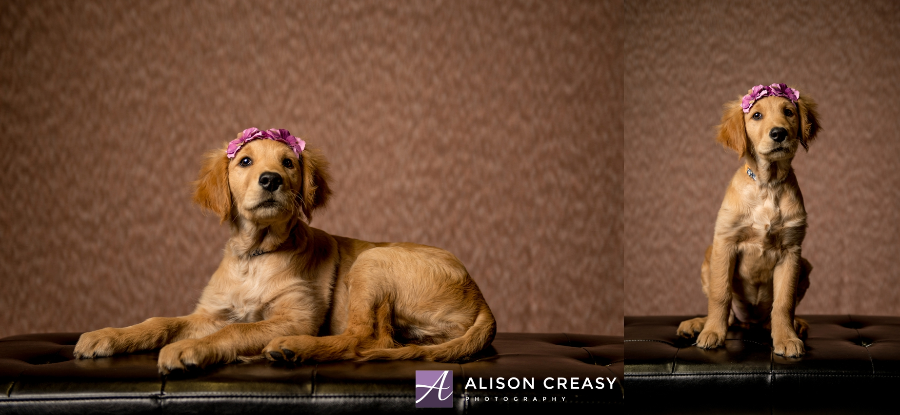 Alison-Creasy-Photography-Lynchburg-VA-Pet-Photographer_0001.jpg