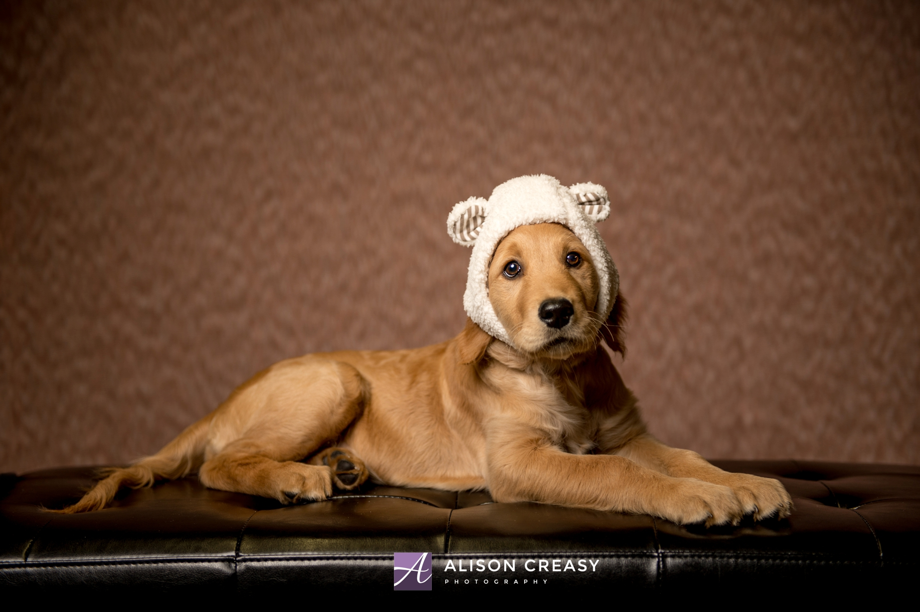 Alison-Creasy-Photography-Lynchburg-VA-Pet-Photographer_0002.jpg