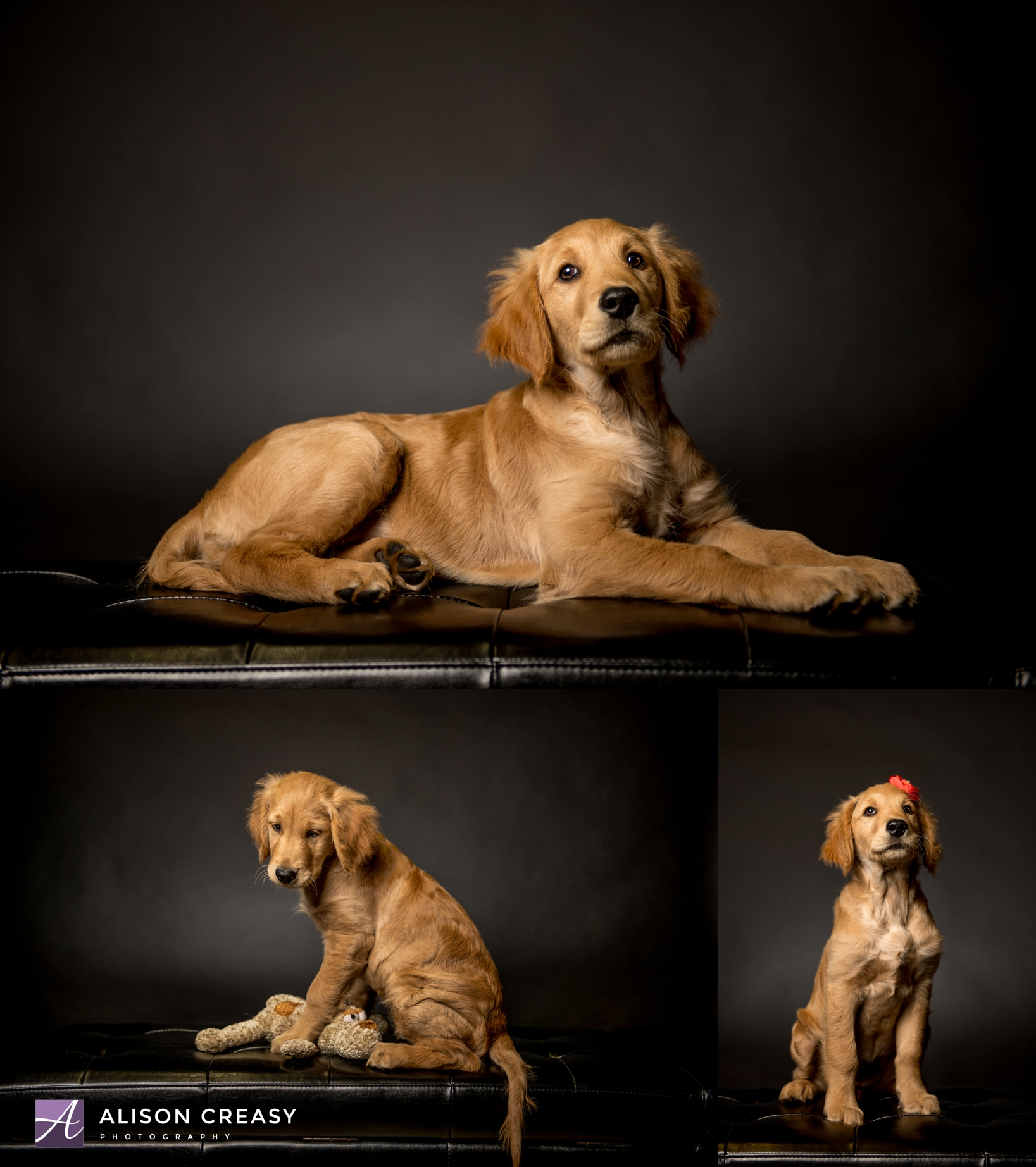 Alison-Creasy-Photography-Lynchburg-VA-Pet-Photographer_0003.jpg