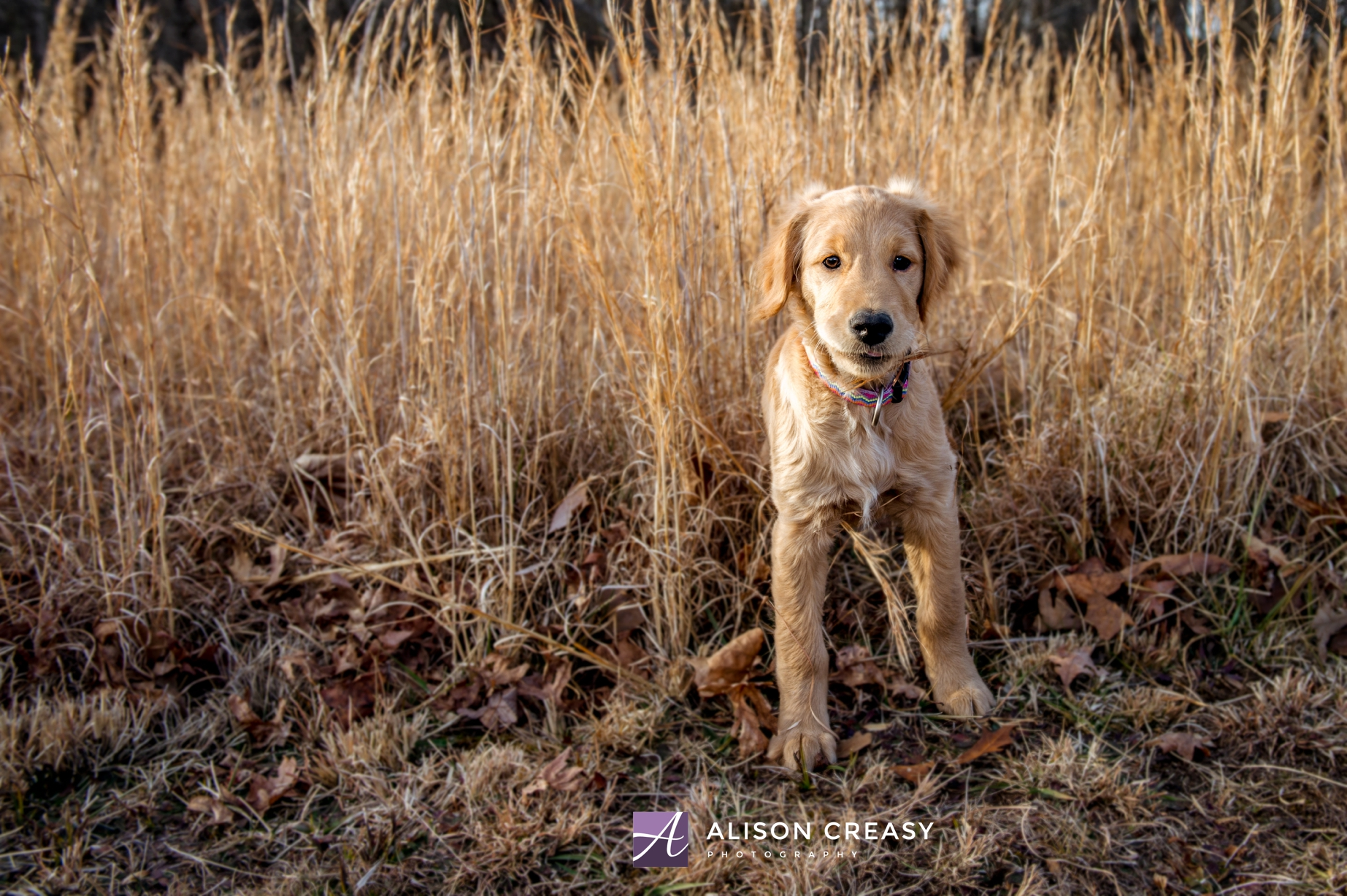 Alison-Creasy-Photography-Lynchburg-VA-Pet-Photographer_0008.jpg