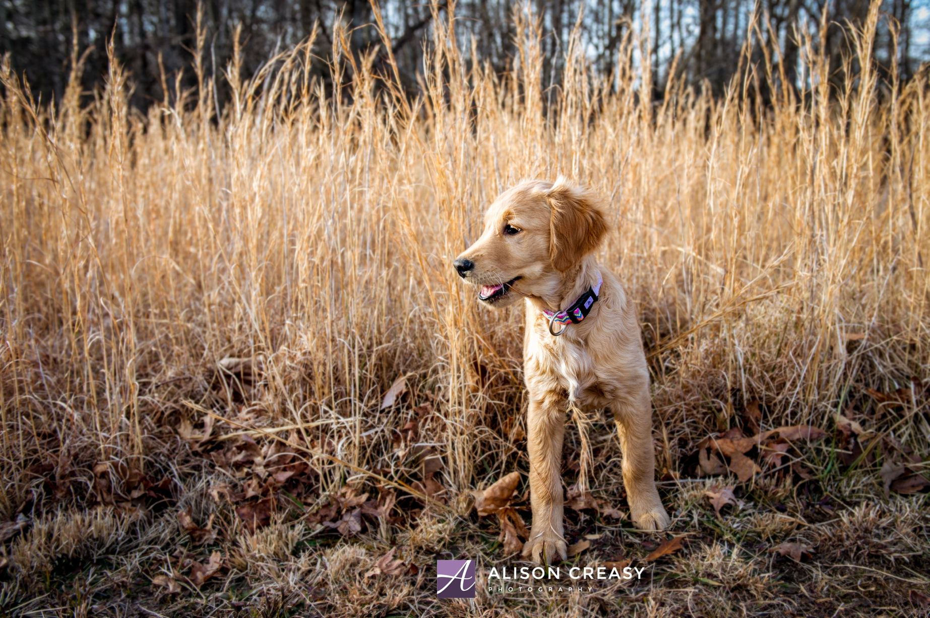 Alison-Creasy-Photography-Lynchburg-VA-Pet-Photographer_0009.jpg
