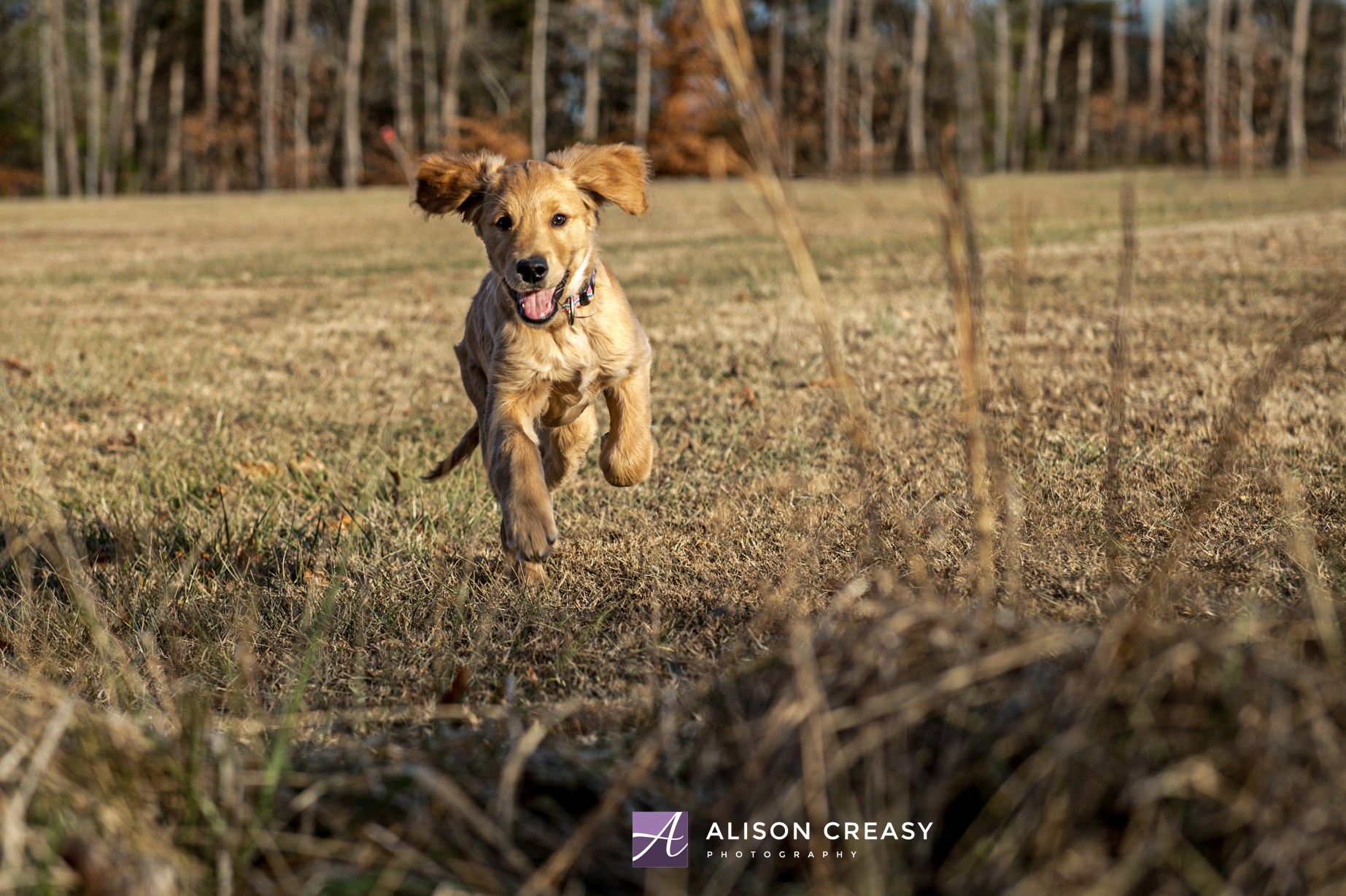 Alison-Creasy-Photography-Lynchburg-VA-Pet-Photographer_0011.jpg