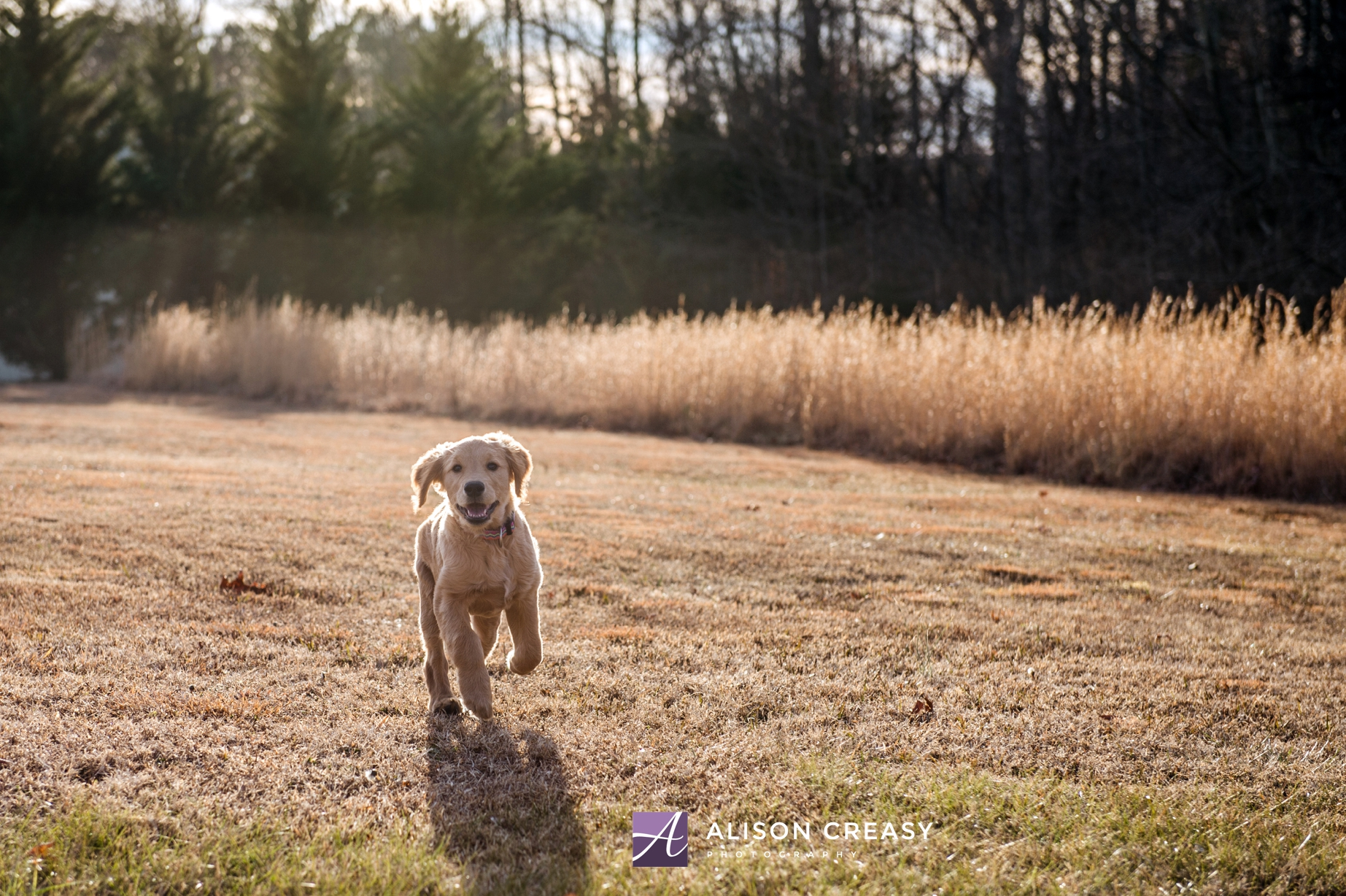 Alison-Creasy-Photography-Lynchburg-VA-Pet-Photographer_0012.jpg
