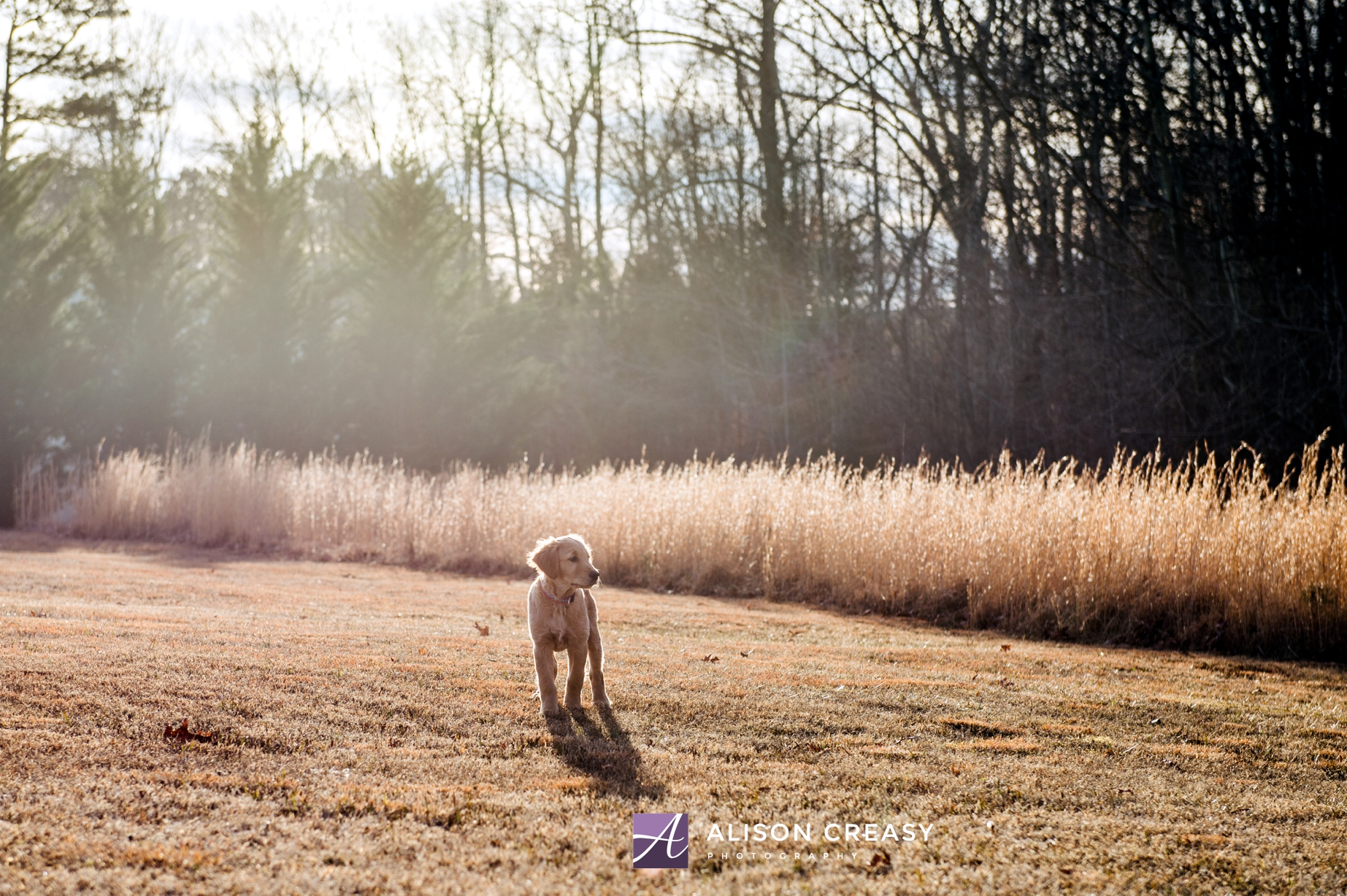Alison-Creasy-Photography-Lynchburg-VA-Pet-Photographer_0013.jpg