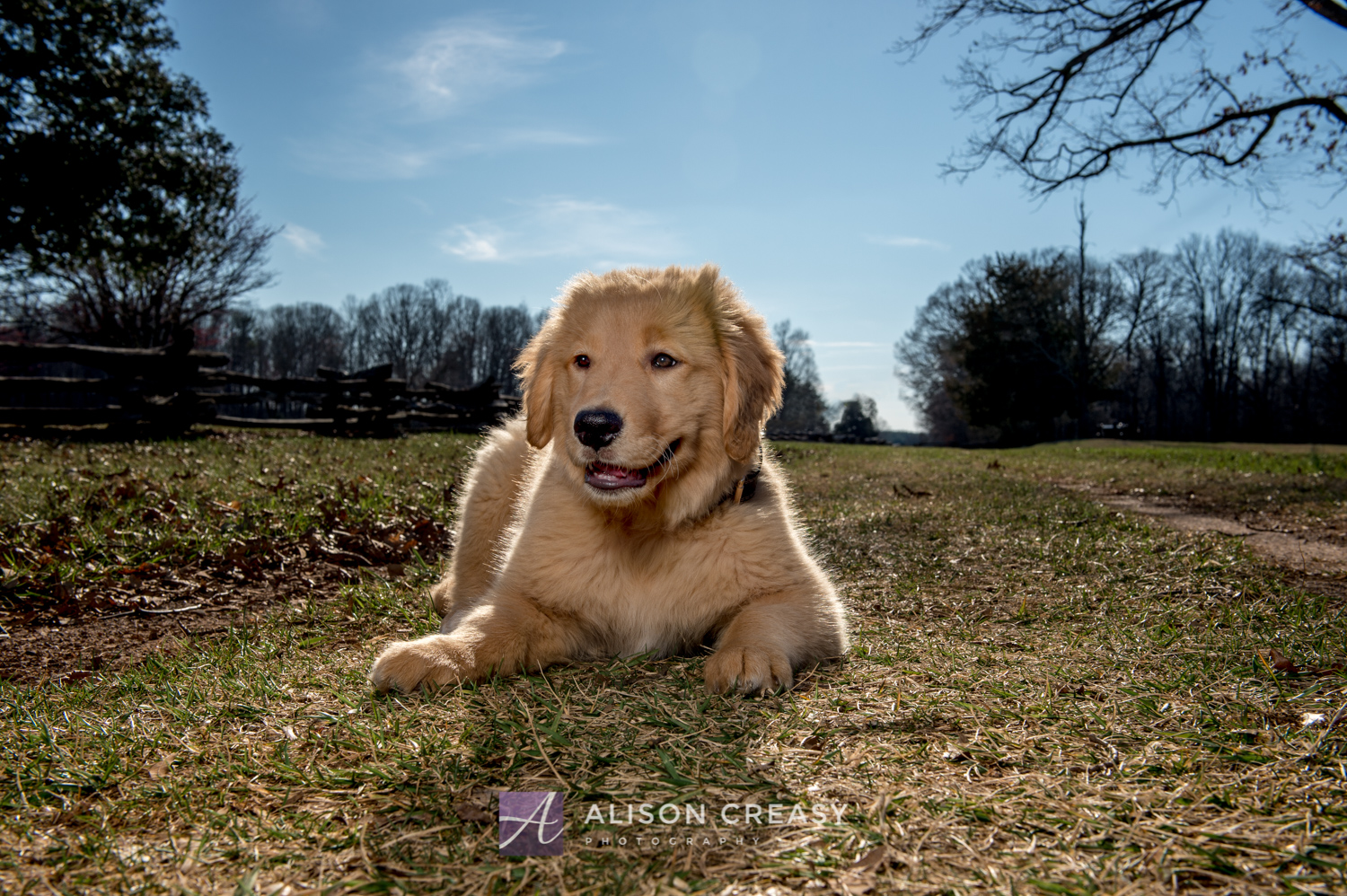 Margot Golden Ret 2019-16-Edit.jpg