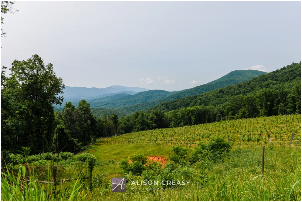 Commercial_Photography_Wine_Event_Alison_Creasy_Photogarphy_Virginia_0018.jpg