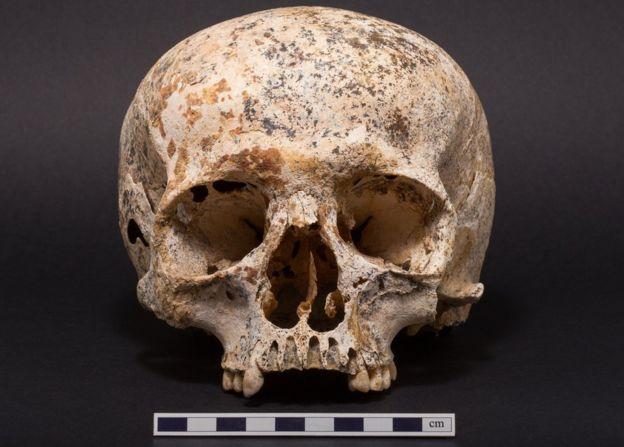Ava's skull found in 1987.