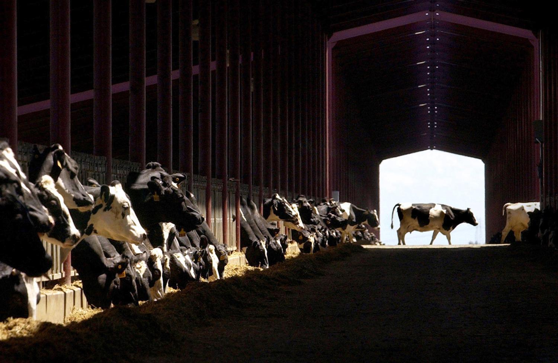 Heritage Dairy, Dixon, Calif.