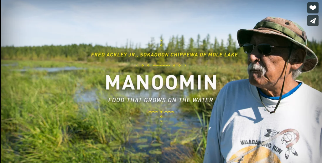 Manoomin  ~ Fred Ackley, Jr. - Sokaogon Chippewa of Mole Lake