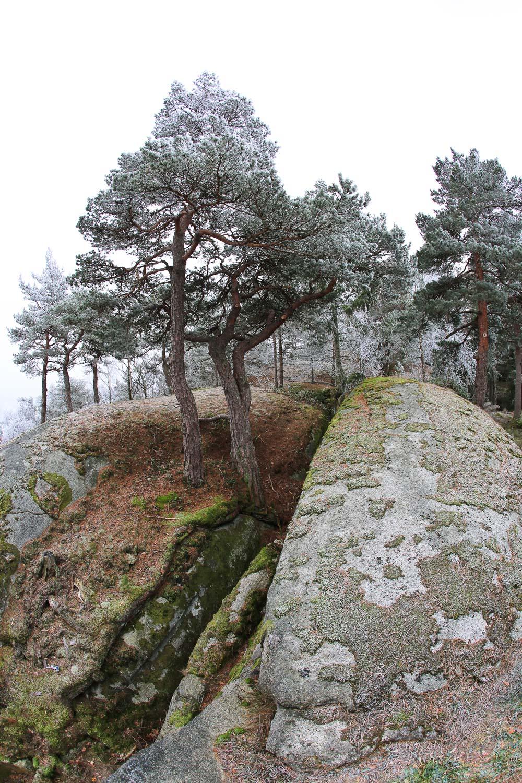 vinterkyst-i-vestfold-1O2A4715.jpg