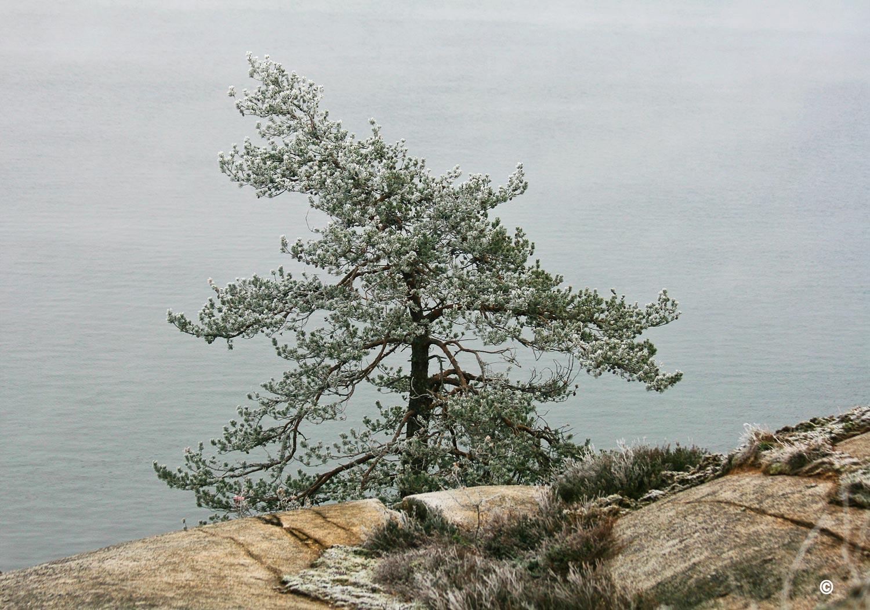 Vestfoldkysten-IMG_7500.jpg