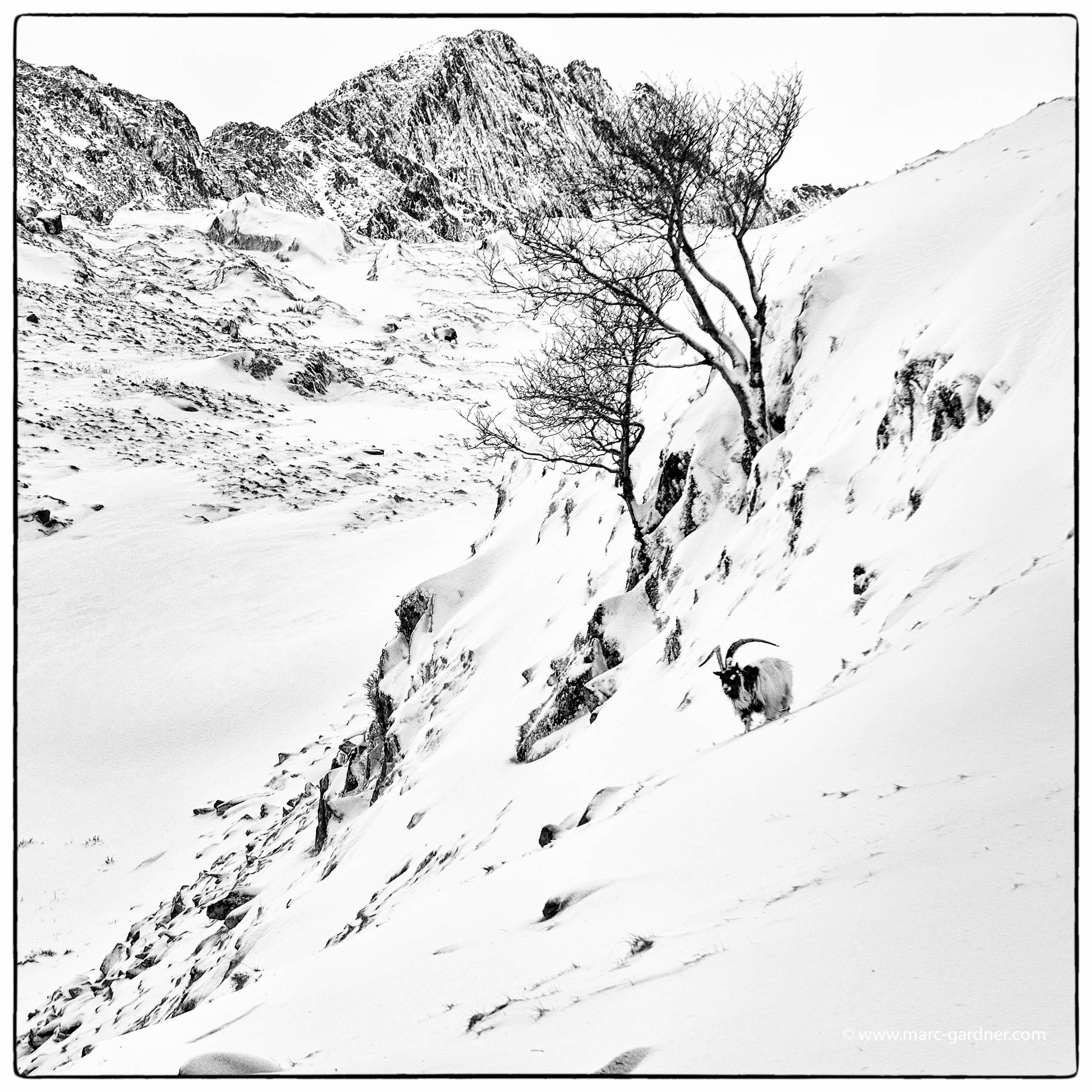 SnowdonSnow-2.jpg