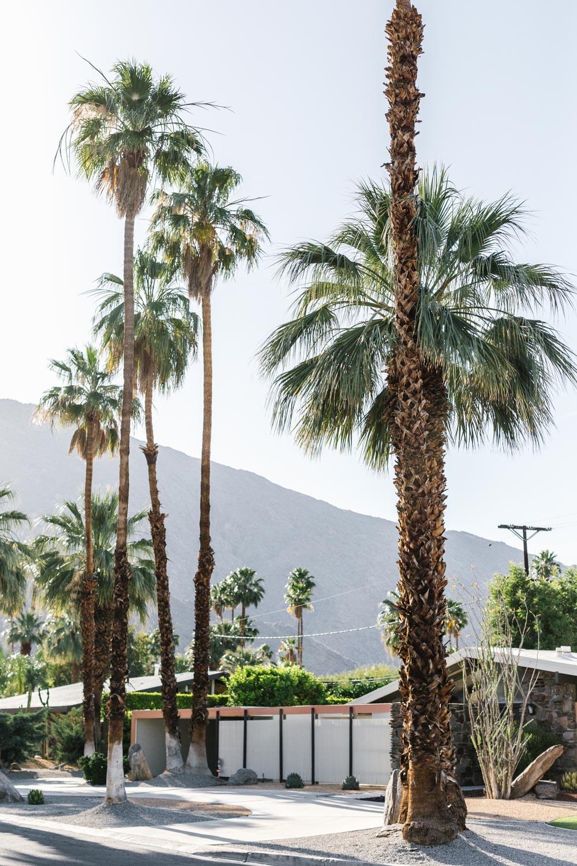 Marnie Hawson - Palm Springs mid century homes