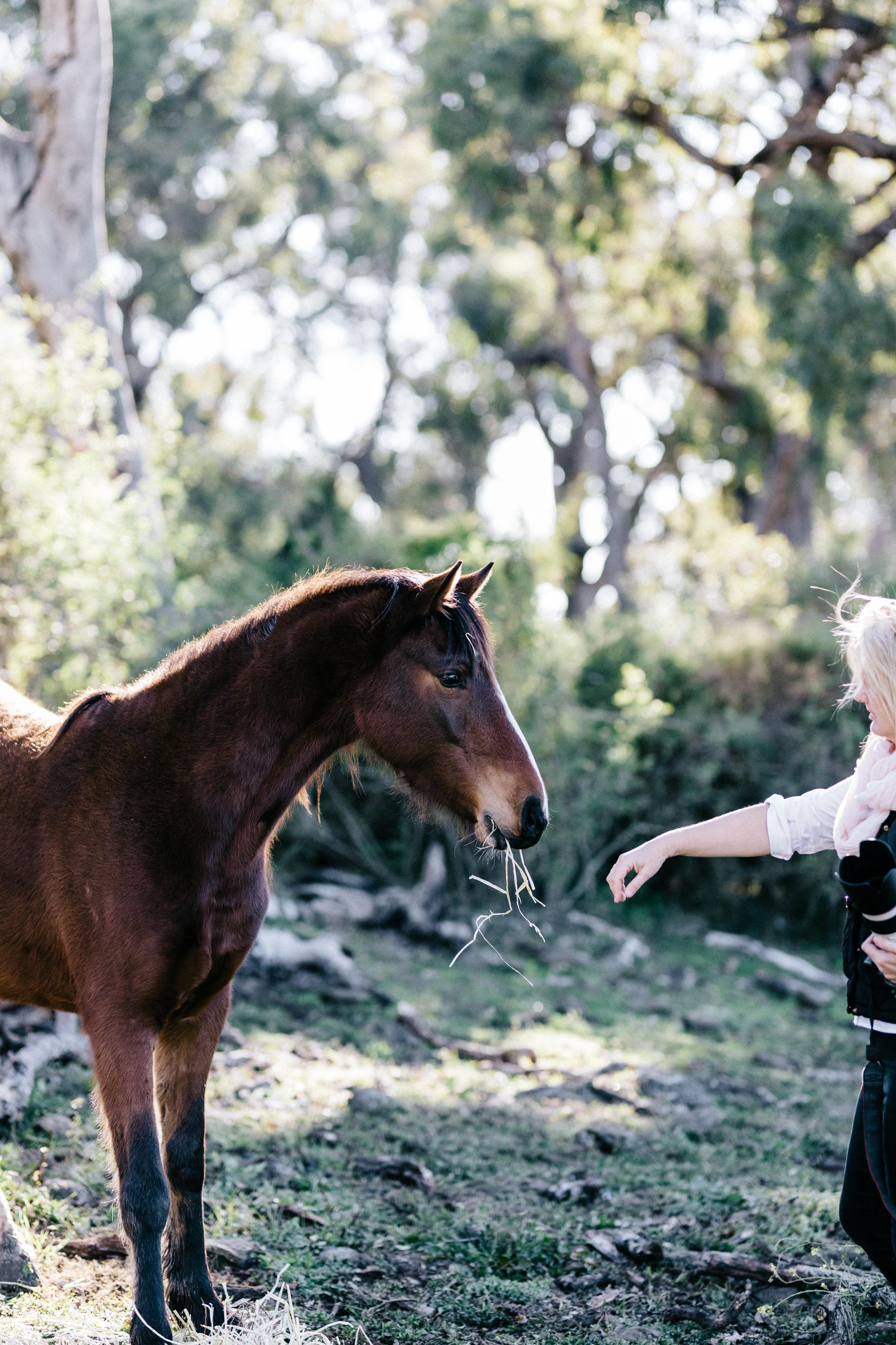 Marnie Hawson, Melbourne lifestyle photographer for Calico Pony, Toowoomba and Country Style magazine