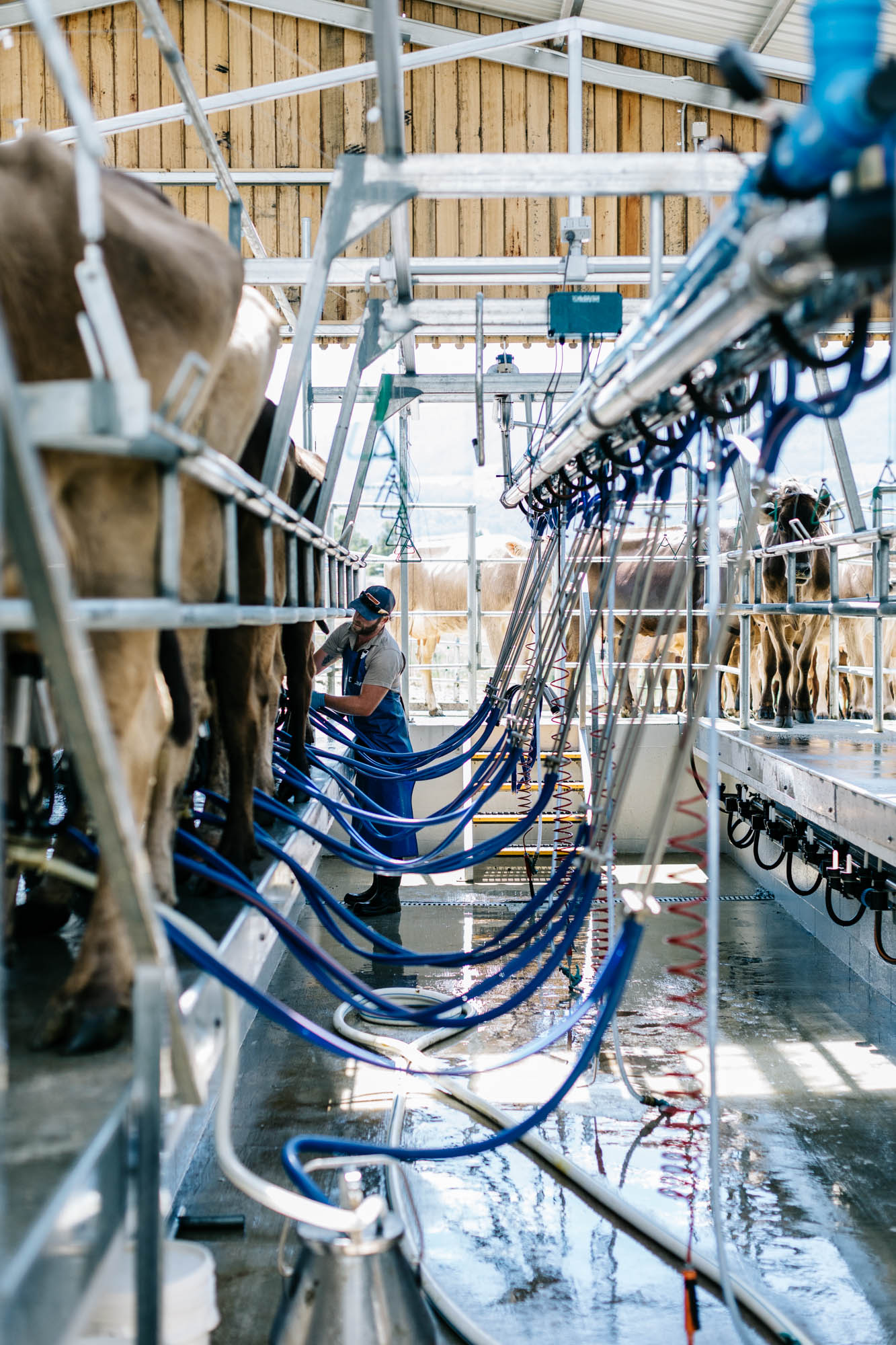 Nick Haddow and the Glen Huon Dairy Co. for Country Style