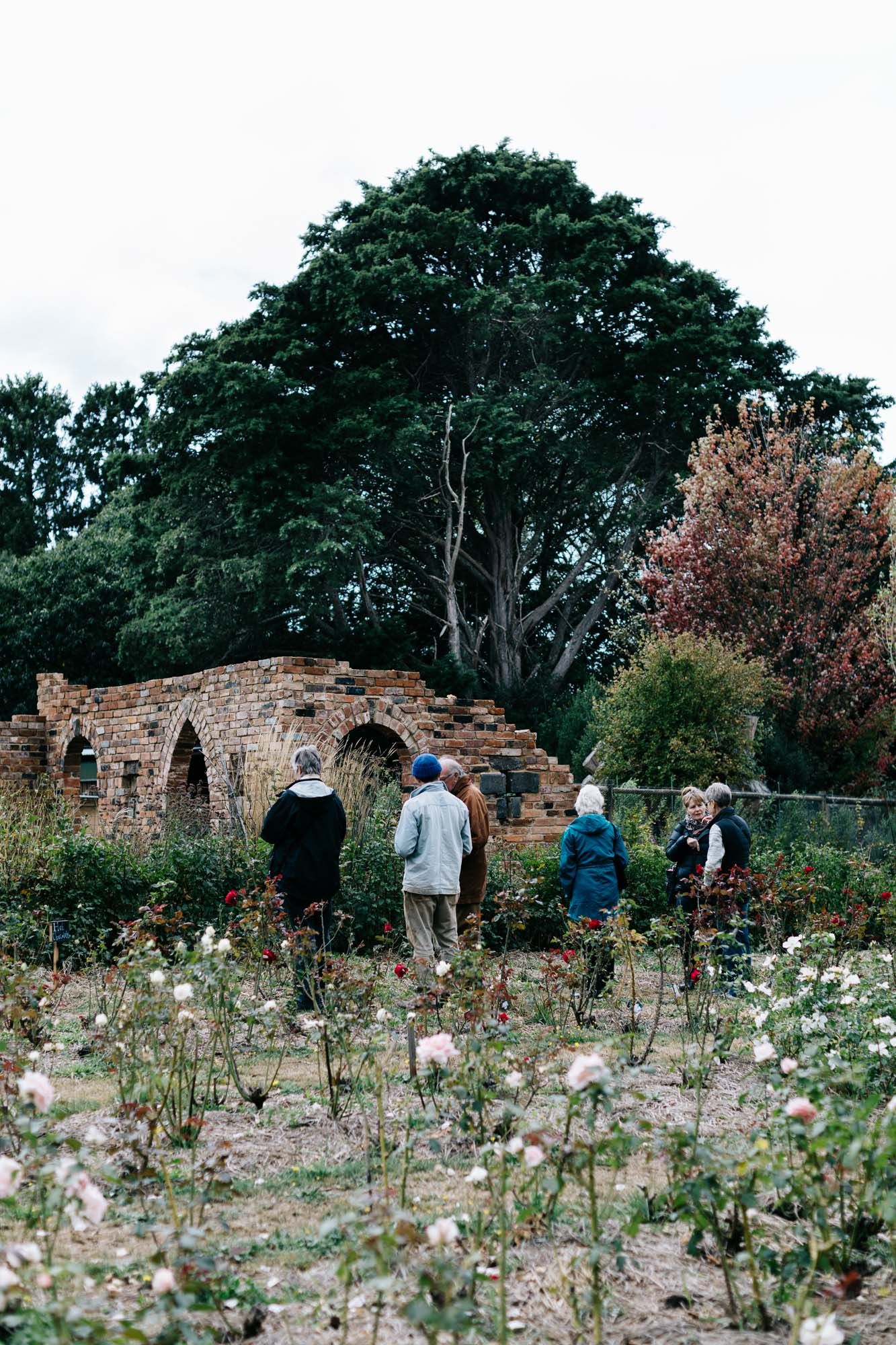 Rose paddock at Acre of Roses, Trentham - a sustainable flower farm and luxury country accommodation. Photography by Marnie Hawson, Melbourne ethical photographer.