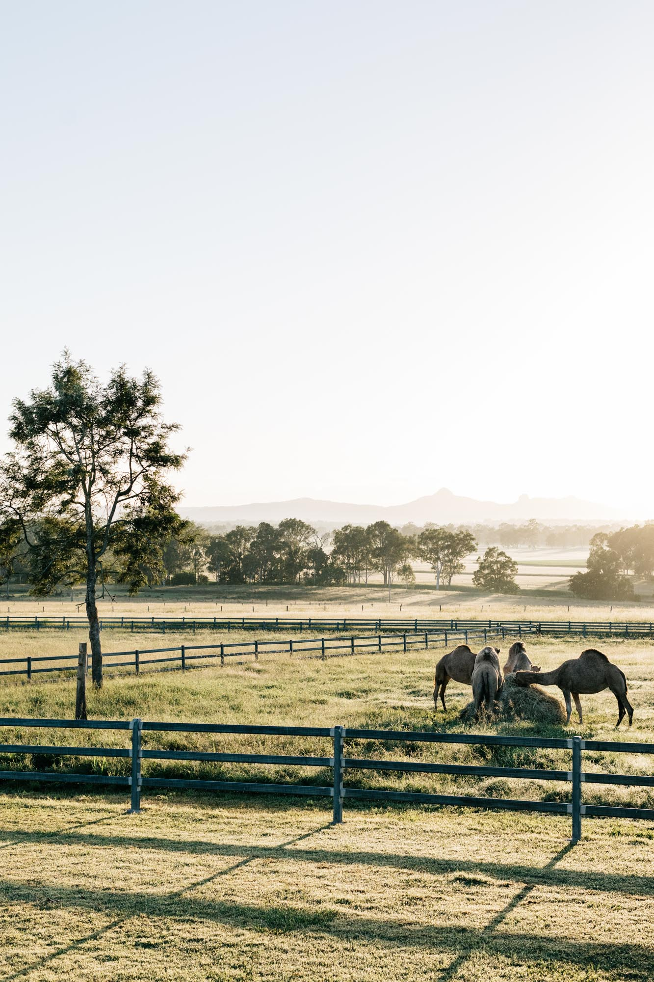 Marnie Hawson, ethical photographer for Summerland Camel Farm and Country Style magazine