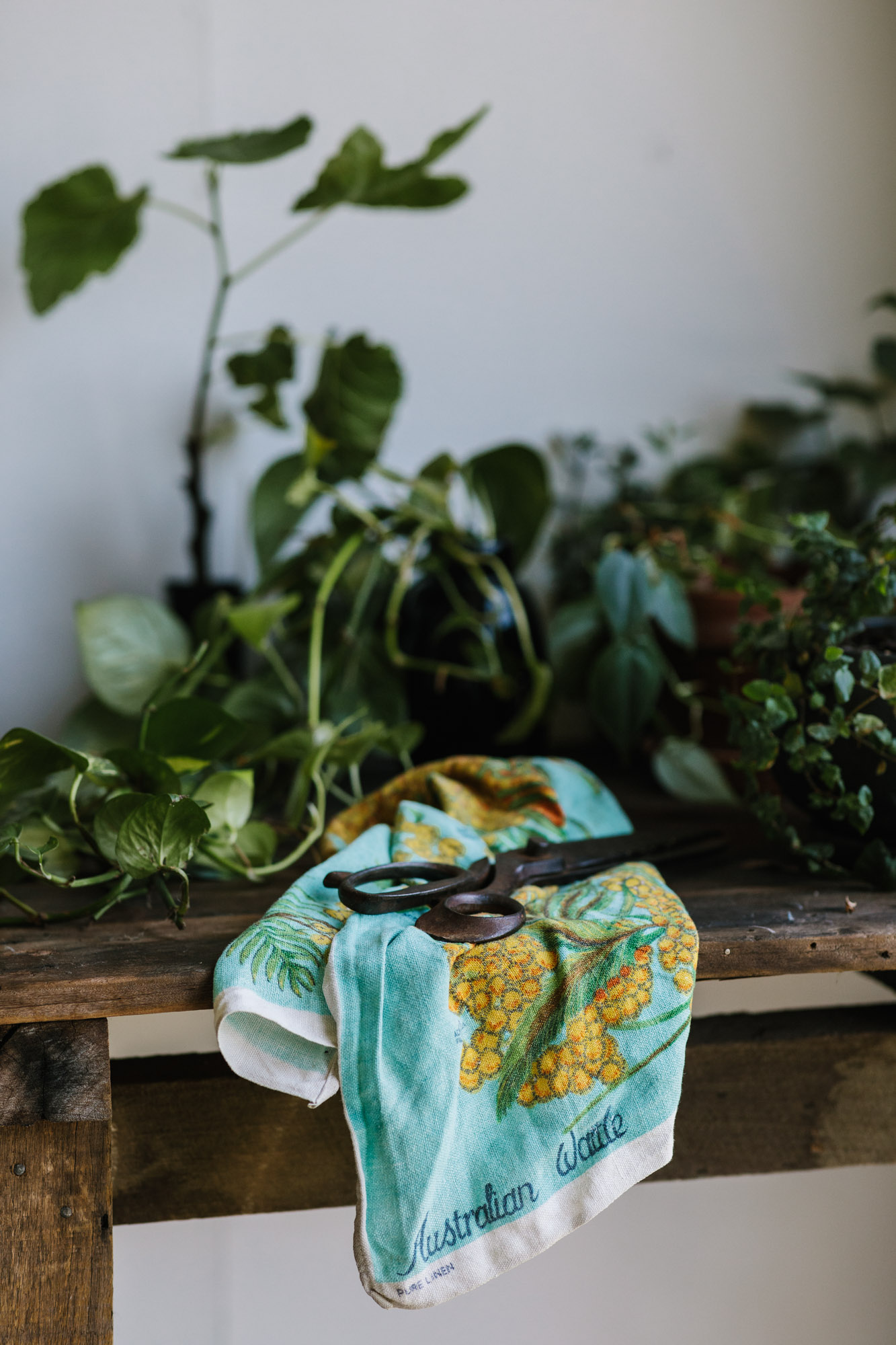 Marnie Hawson, lifestyle Melbourne photography for Sow 'n Sow, Maleny QLD and Country Style
