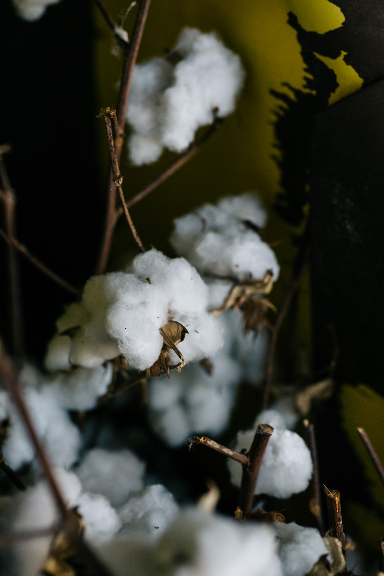 Melbourne travel photographer, Marnie Hawson for Country Style and Goondiwindi Cotton