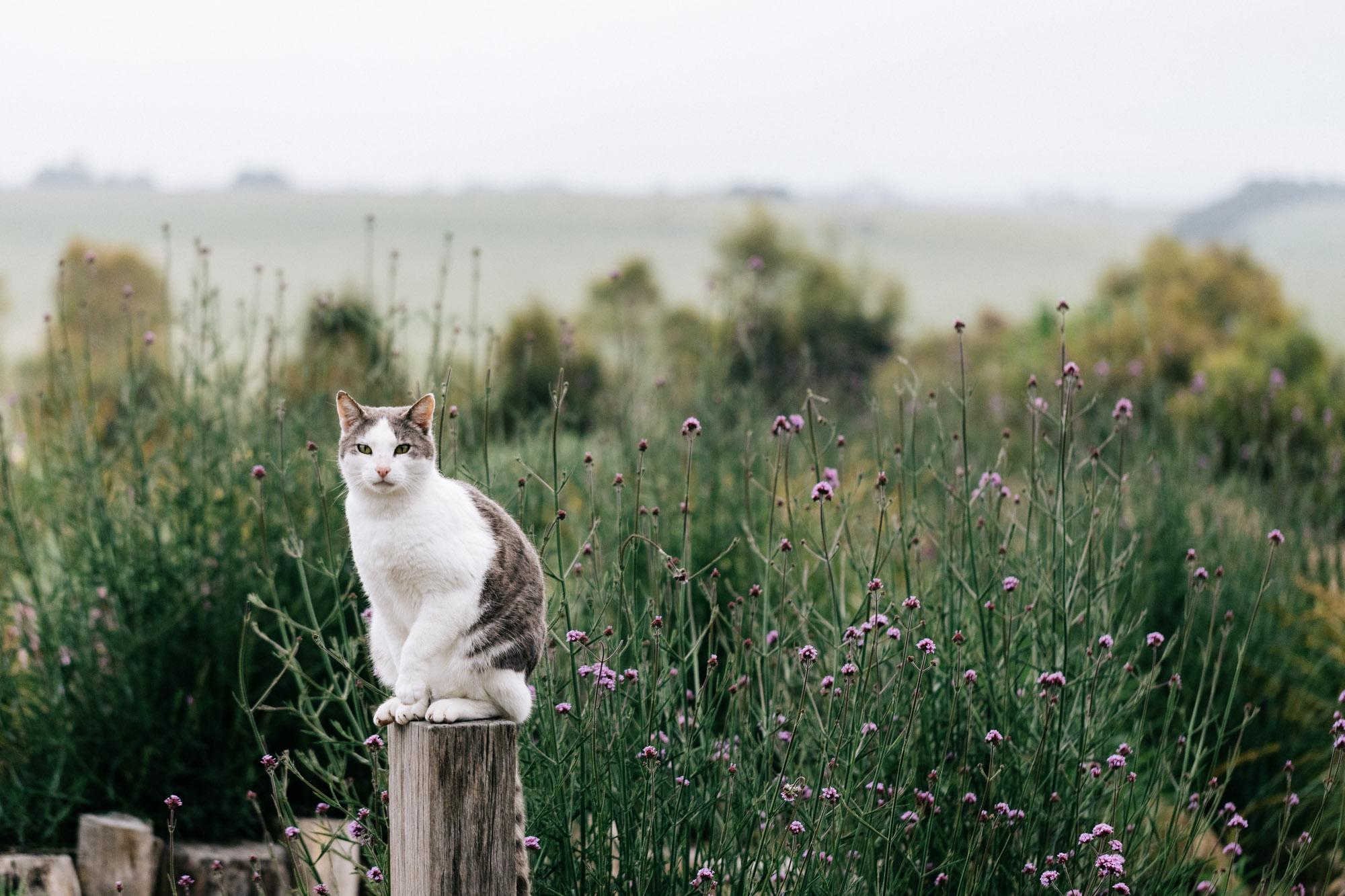 Kathleen Murphy Landscape Design - Gisborne VIC. Photography by Melbourne garden photographer Marnie Hawson.