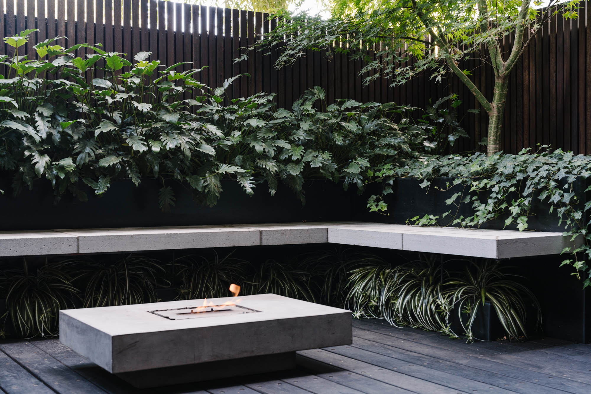 Melbourne landscape photographer Marnie Hawson for Australian House & Garden, South Yarra courtyard. Landscaping by Lisa Ellis.