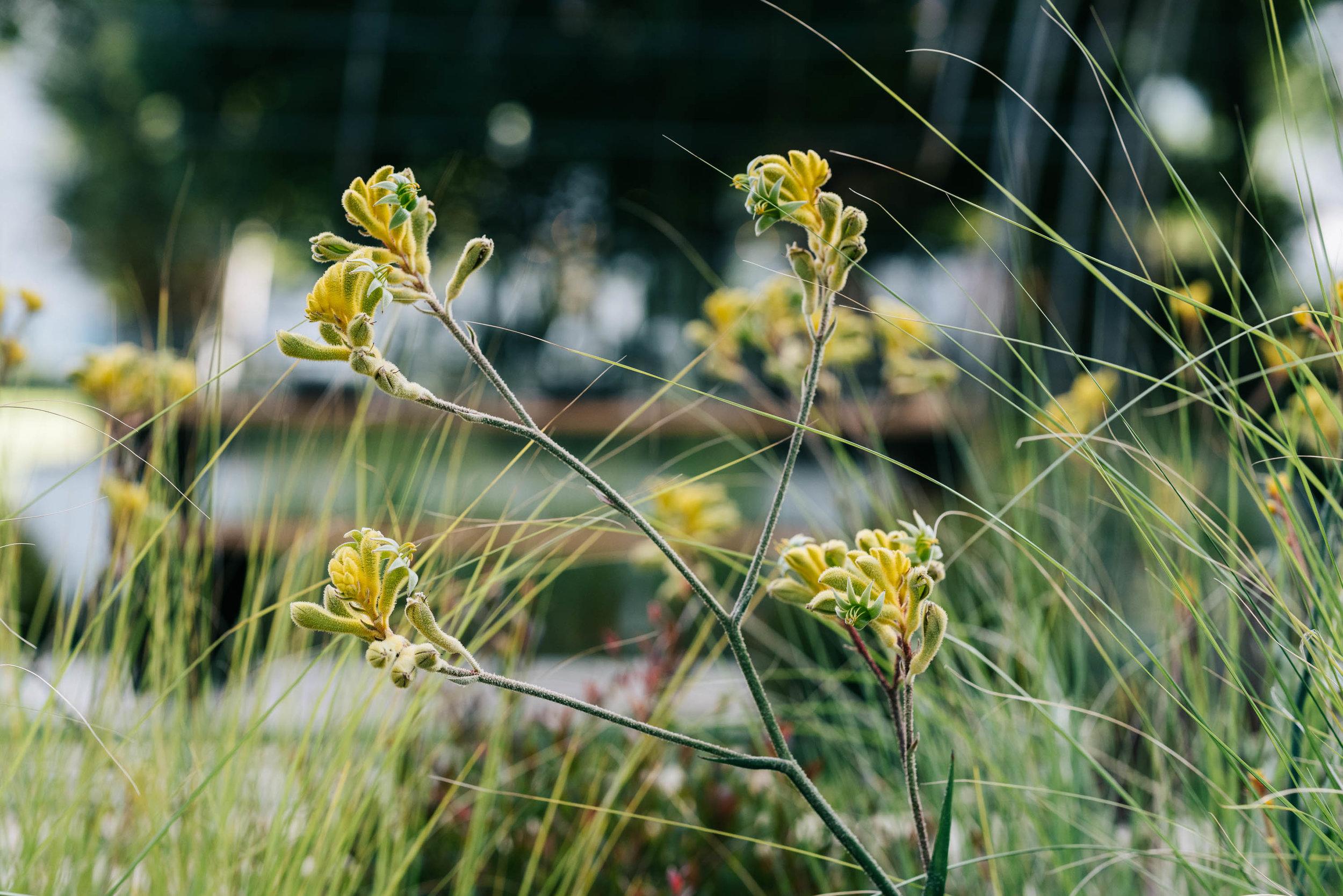 Melbourne landscape photographer Marnie Hawson for Melbourne International Flower & Garden Show and Australian House & Garden magazine.