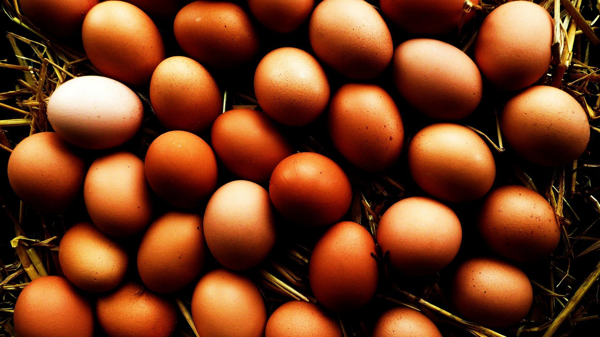Beautiful home-grown eggs - aren'tchooks brilliant?