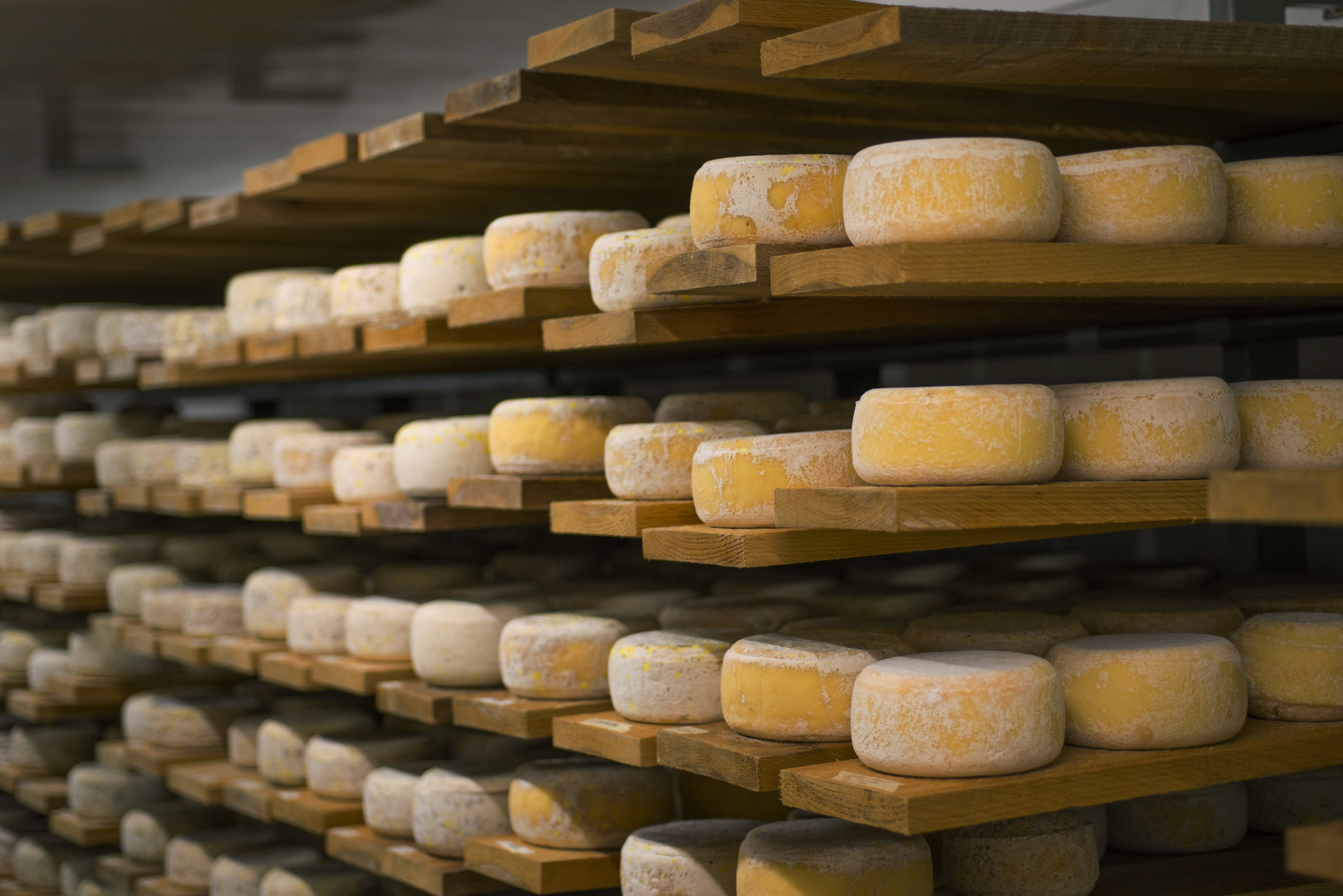 cheese_cave_2_TOM5229.jpg