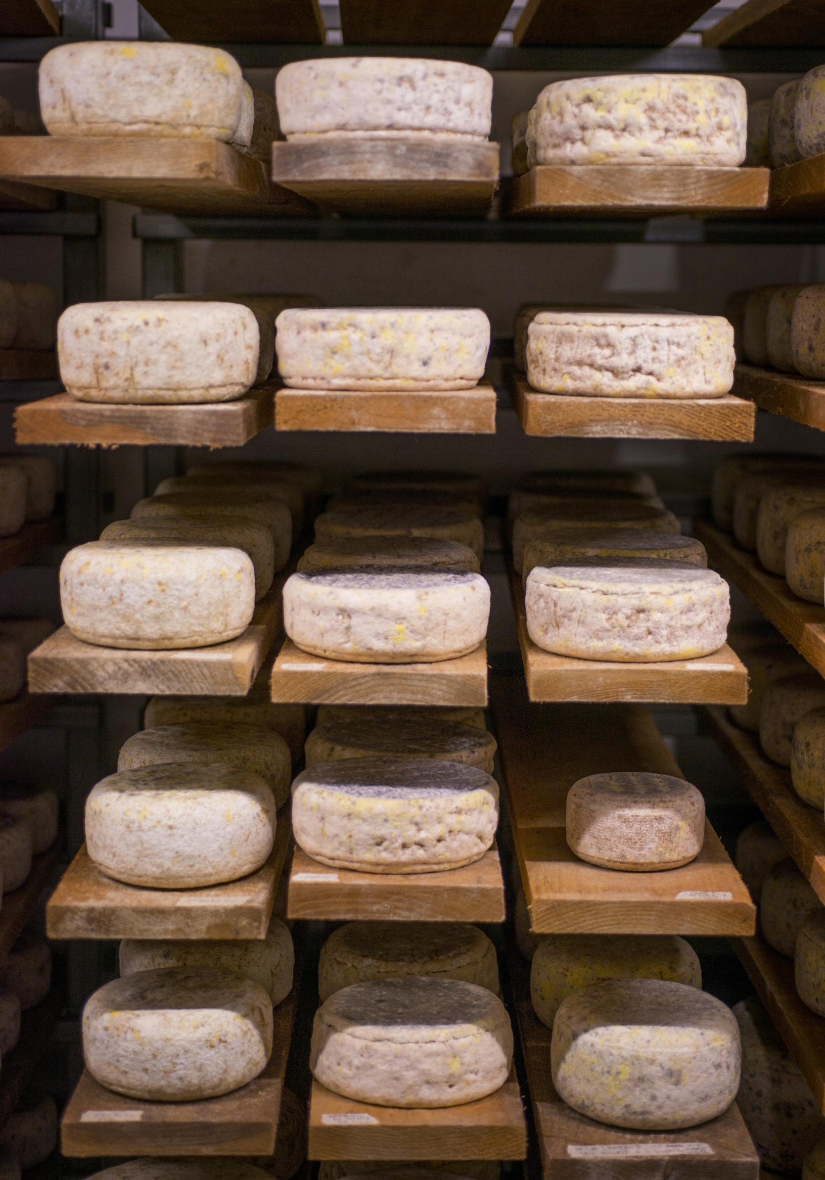 cheese_cave_TOM5235.jpg