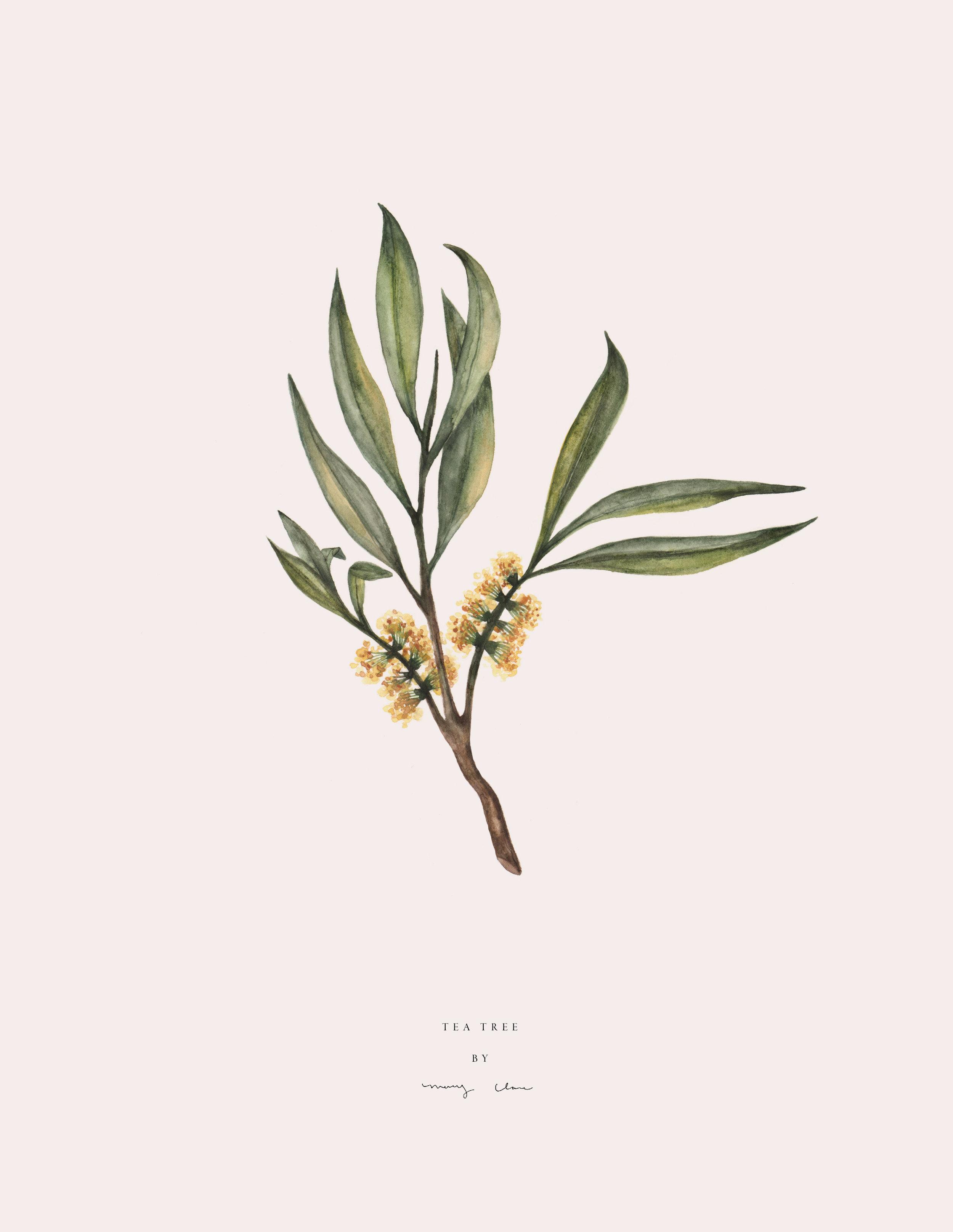 Fruit-maryclarewilkie-03.jpg