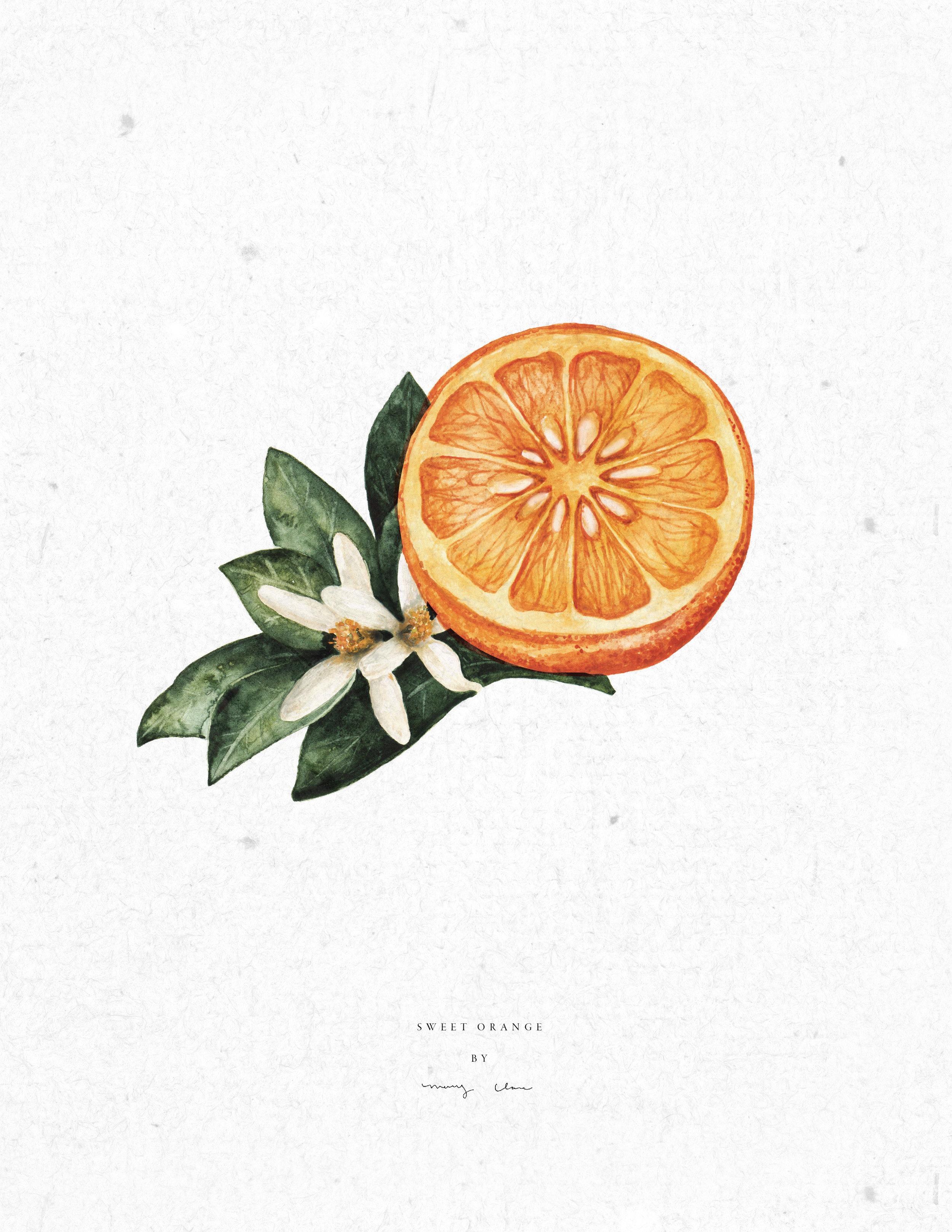 Fruit-maryclarewilkie-02.jpg