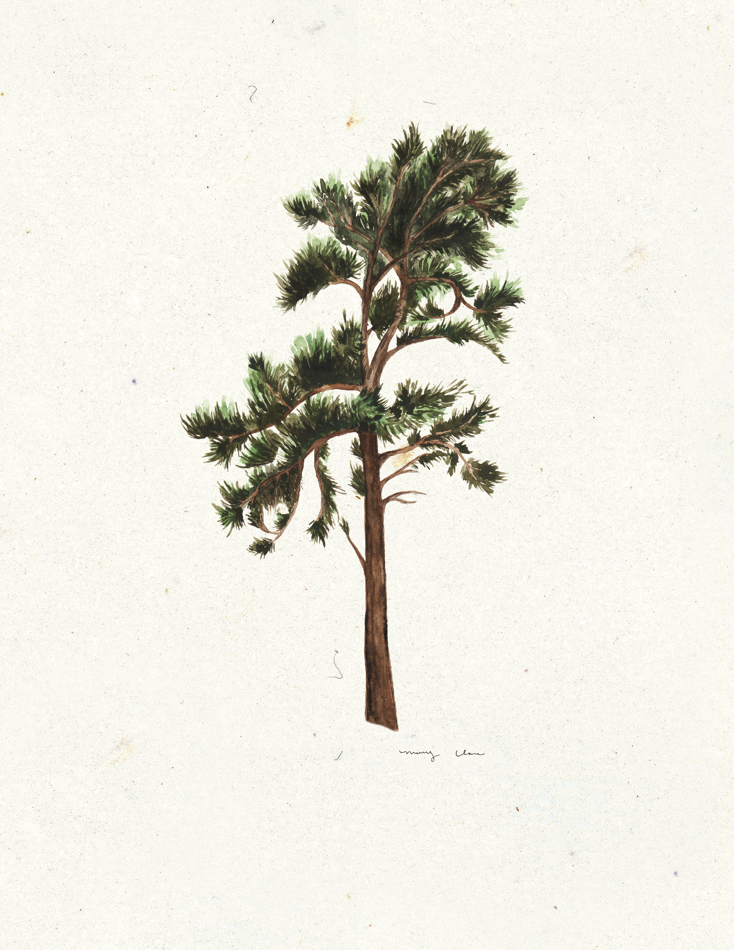 trees mary clare wilkie