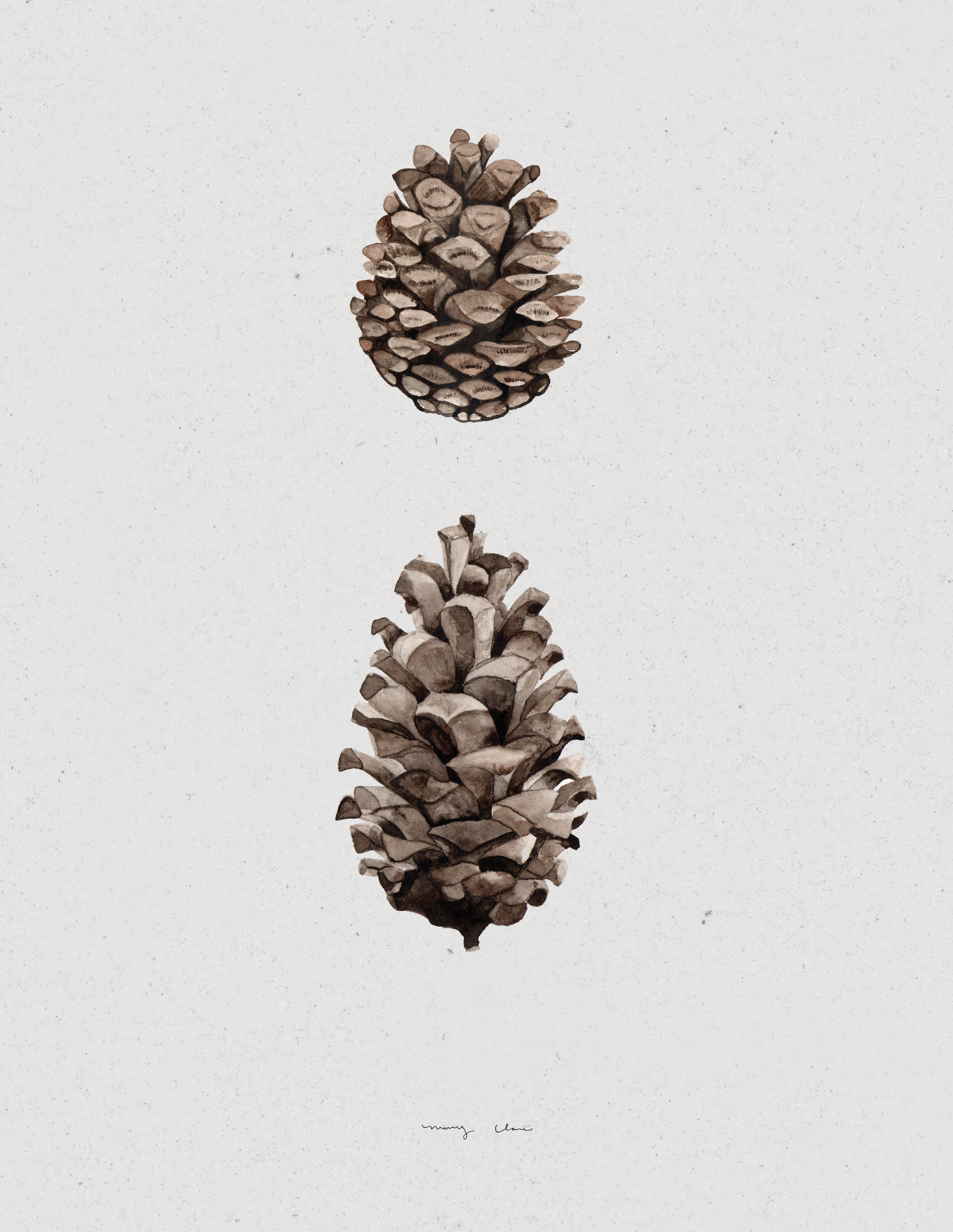 woodland pinecones mary clare wilkie