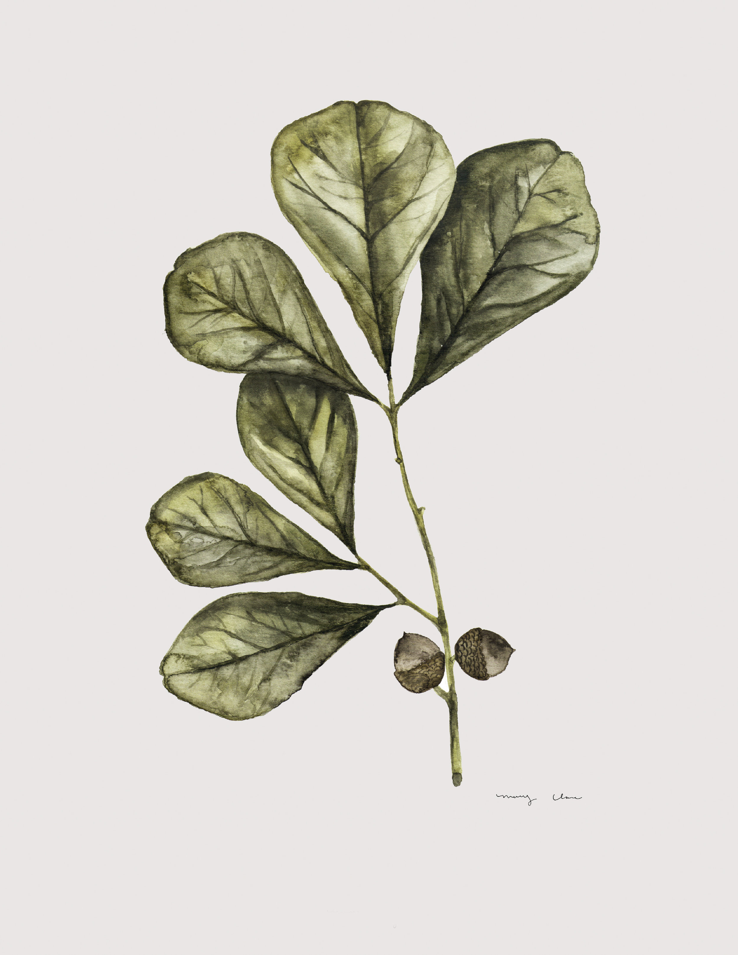 Fig Leaves: mary clare wilkie