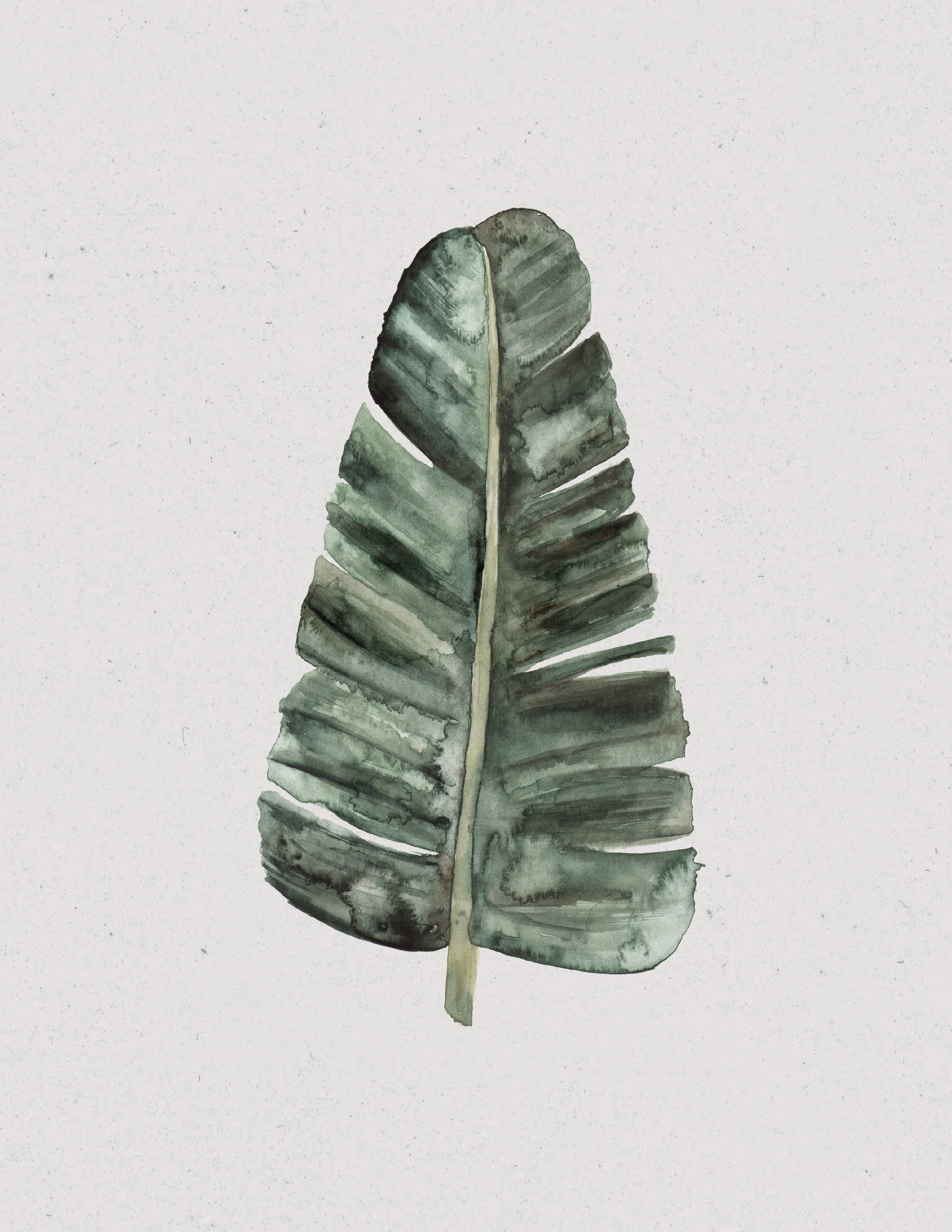 Banana Leaf: Mary Clare Wilkie