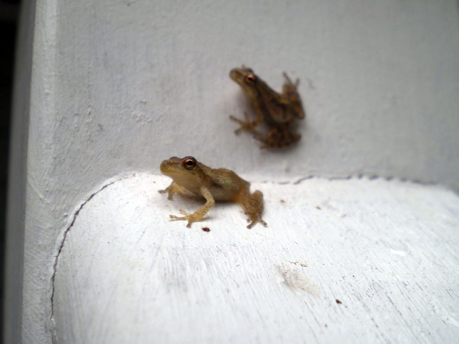 July2Frogs#4.jpg