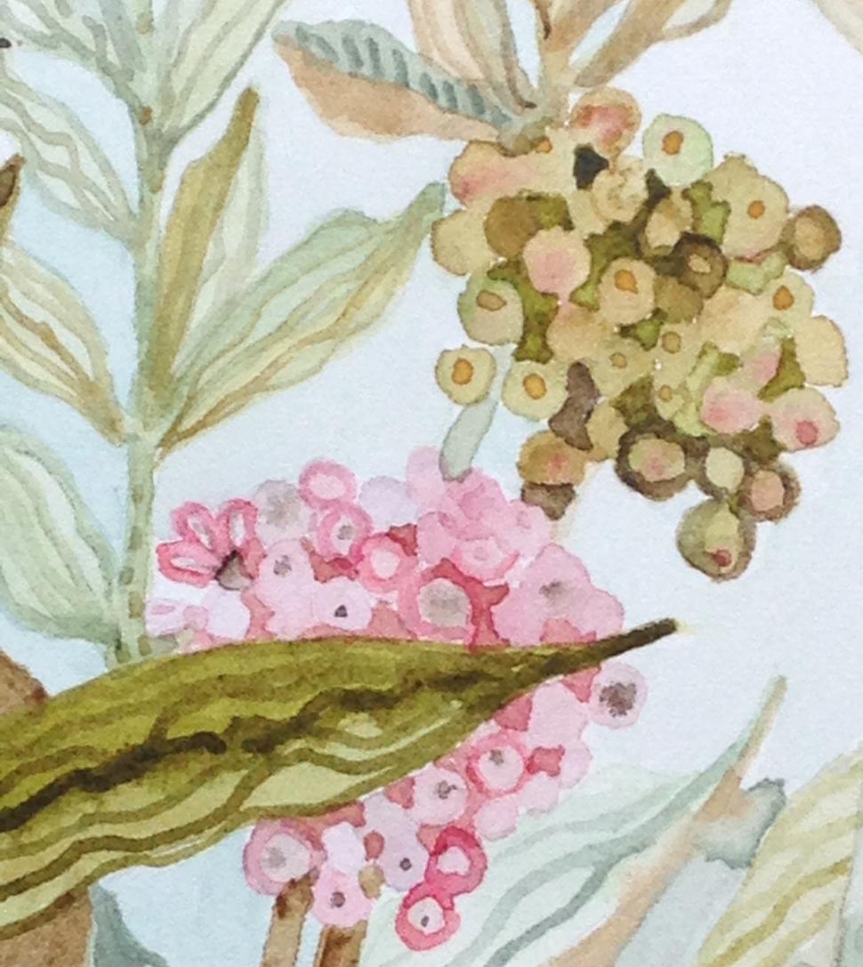 """""""Milkweed"""" Detail"""