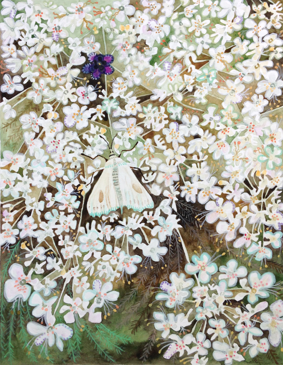 """Queen Anne's Lace and White Moth"""